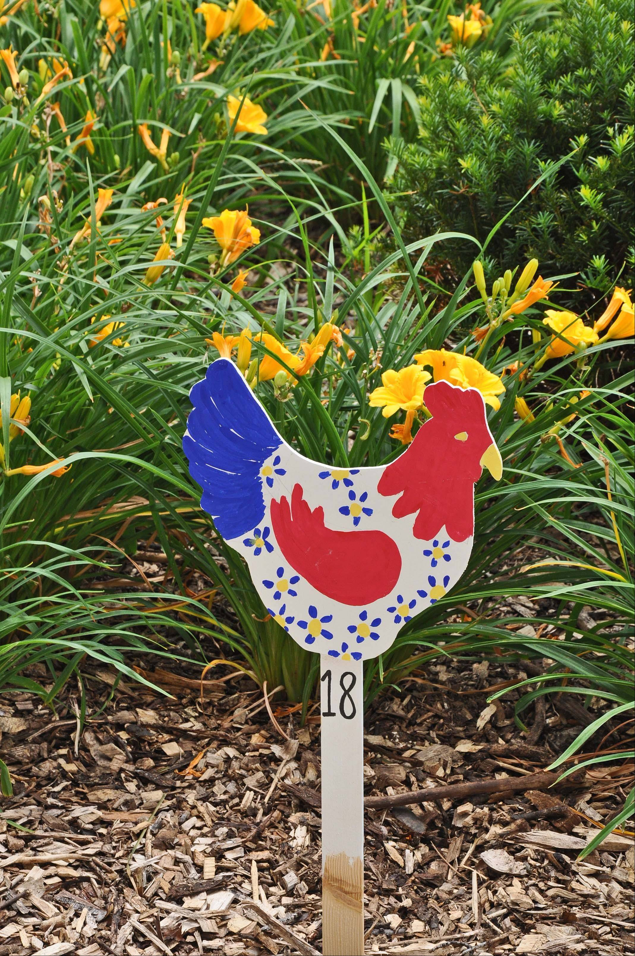 Decorated chickens are found throughout the Holmstad, a senior living community in Batavia. The exhibit is in response to the bulldog sculptures found throughout Batavia, and is a nod to the discussions over Batavia's city ordinance on chickens.