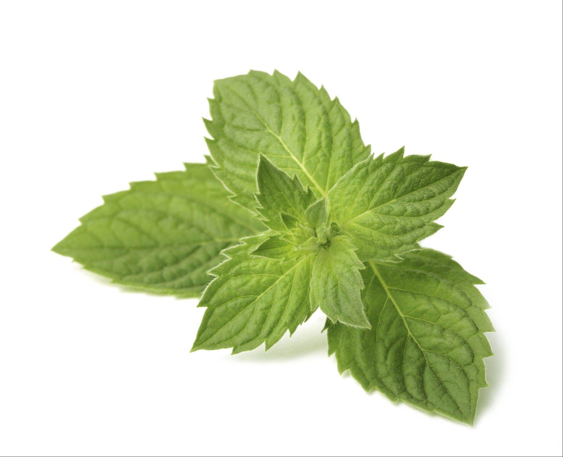 Mint is not limited to just candies, iced tea and mojitos.