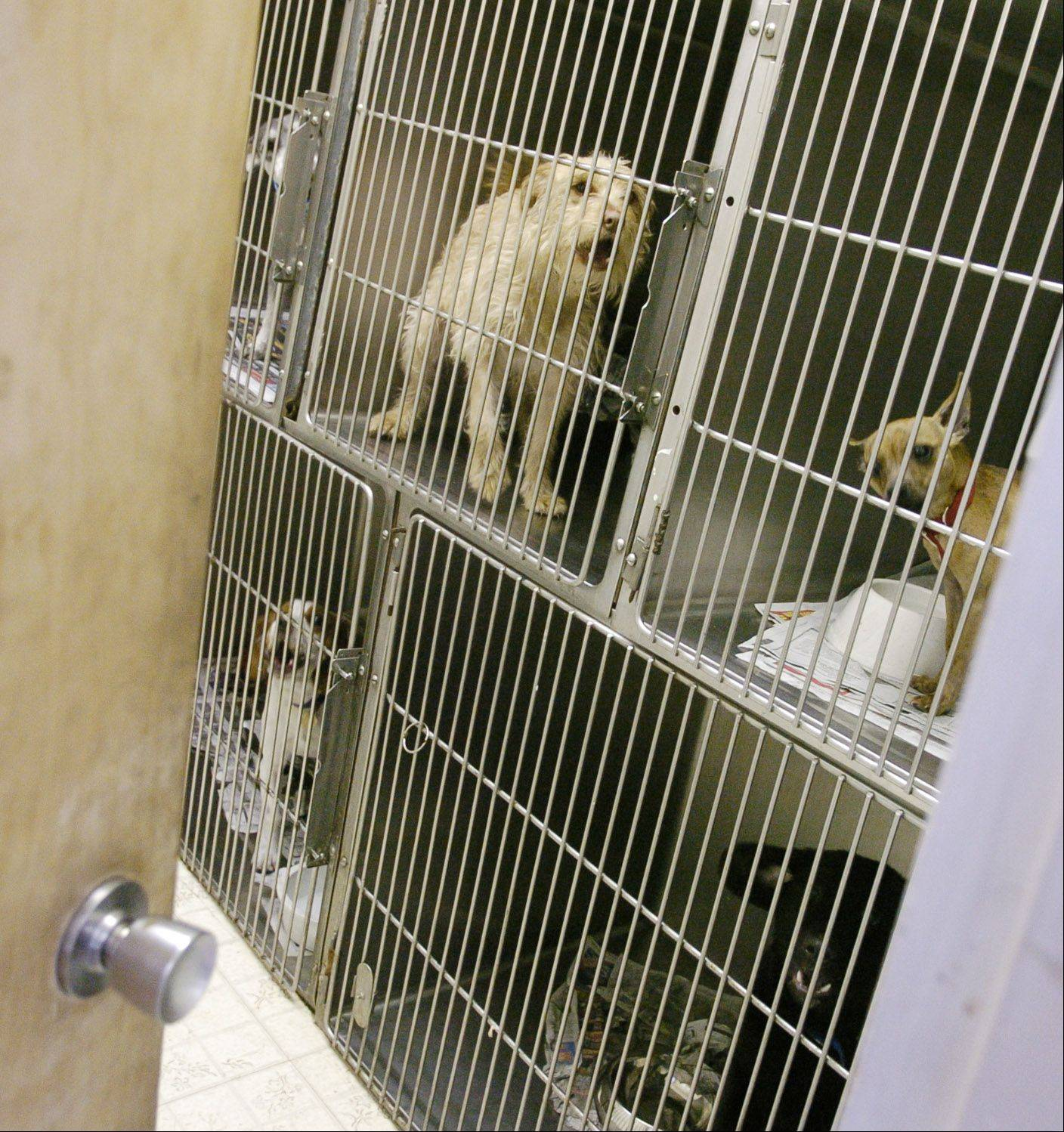 McHenry County's animal control department handles 2,500 animals a year on a budget of $720,000, which includes veterinarian services and 18 staff members. Kane County's animal control wants a budget of $932,000 to cover the cost of an administrator and a part-time veterinarian to handle 400 animals.