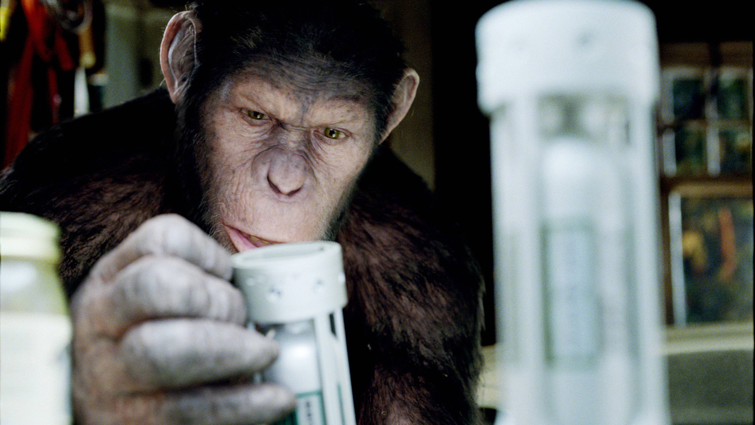 Caesar, a super smart chimpanzee, contemplates stealing a deadly virus in the science-fiction prequel