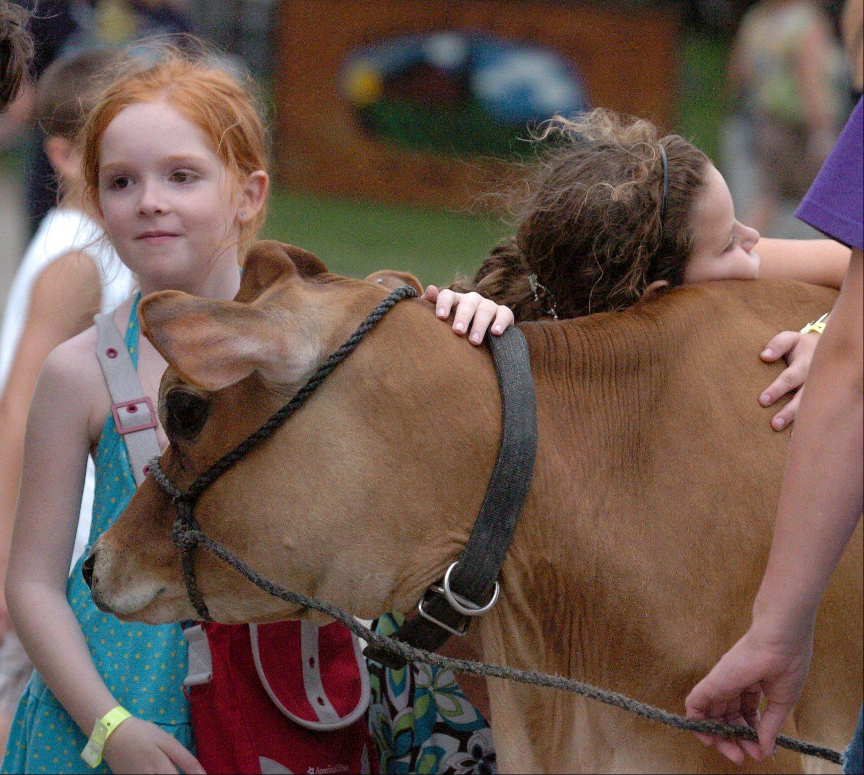 Sophie Loiacano, right, 9, of Lake in the Hills and Aspen Davis, left, 8, of Lake in the Hills, show the one-year-old cow, Honey Suckle, some love at the McHenry County Fair on Friday.