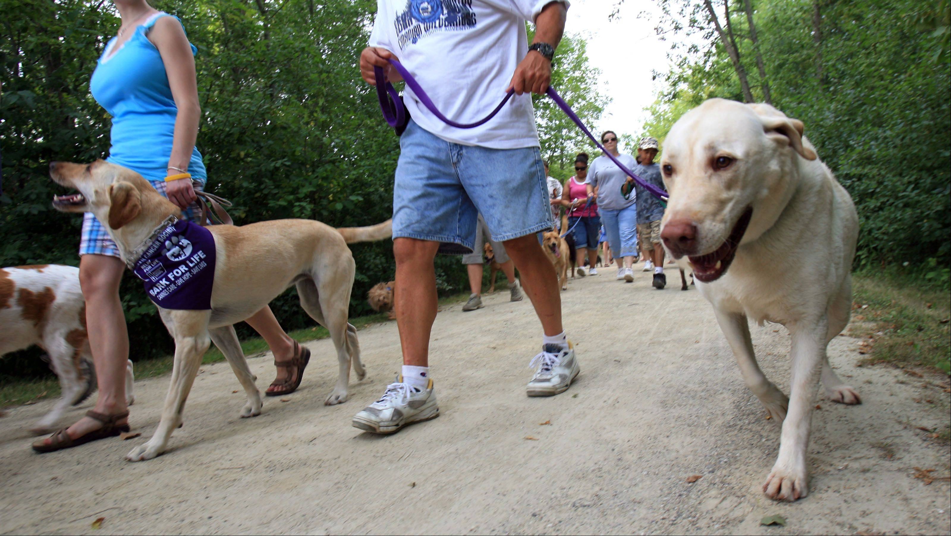 Bark for Life supporters will hit the trail for a 1-mile walk Sunday to raise money for cancer research.