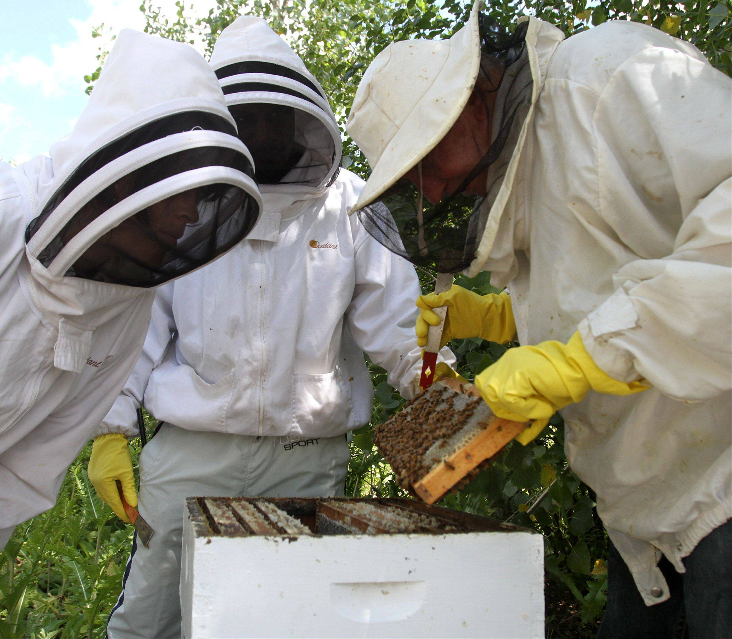Head beekeeper John Hansen, right, checks a frame from a beehive with Holley Blackwell, general manager with Sweet Beginnings, left, and Curtis Camp.