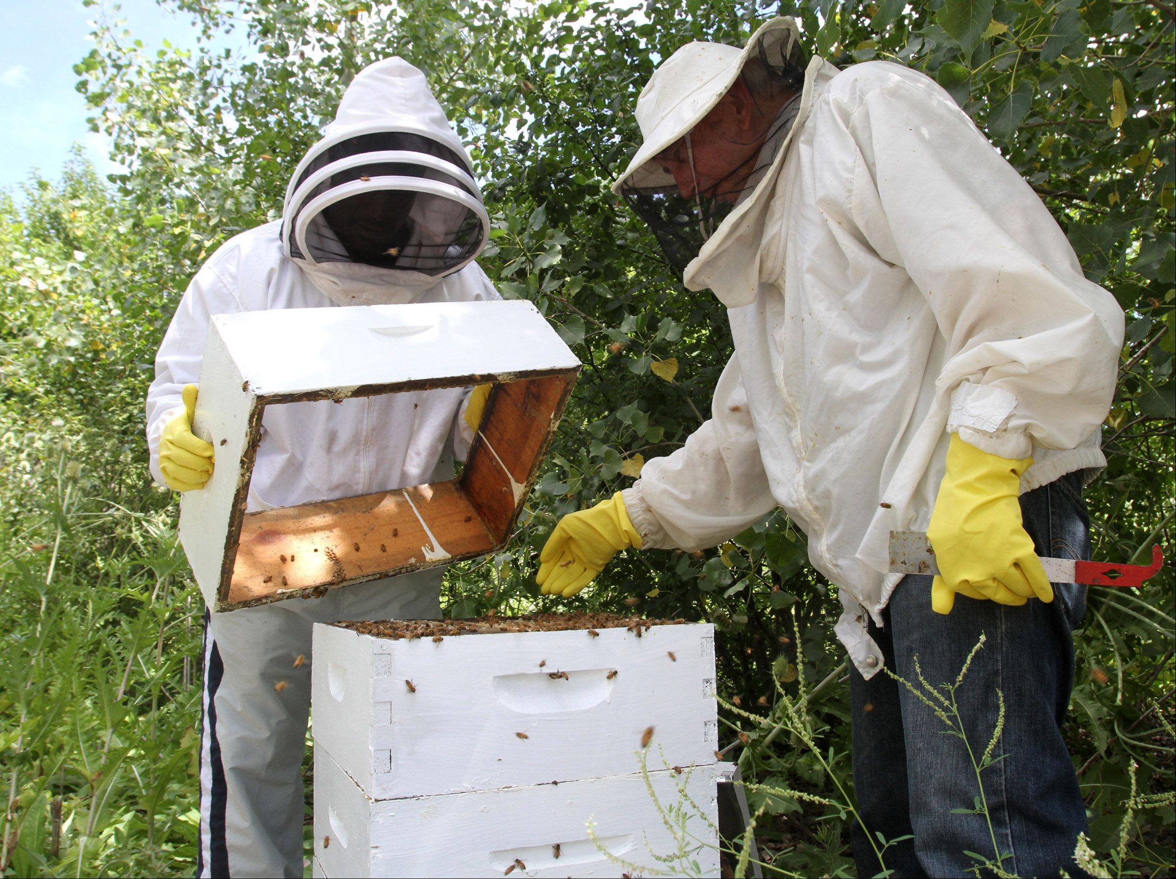 Head beekeeper John Hansen, right, checks a hive with help from Sweet Beginnings team member Curtis Camp.