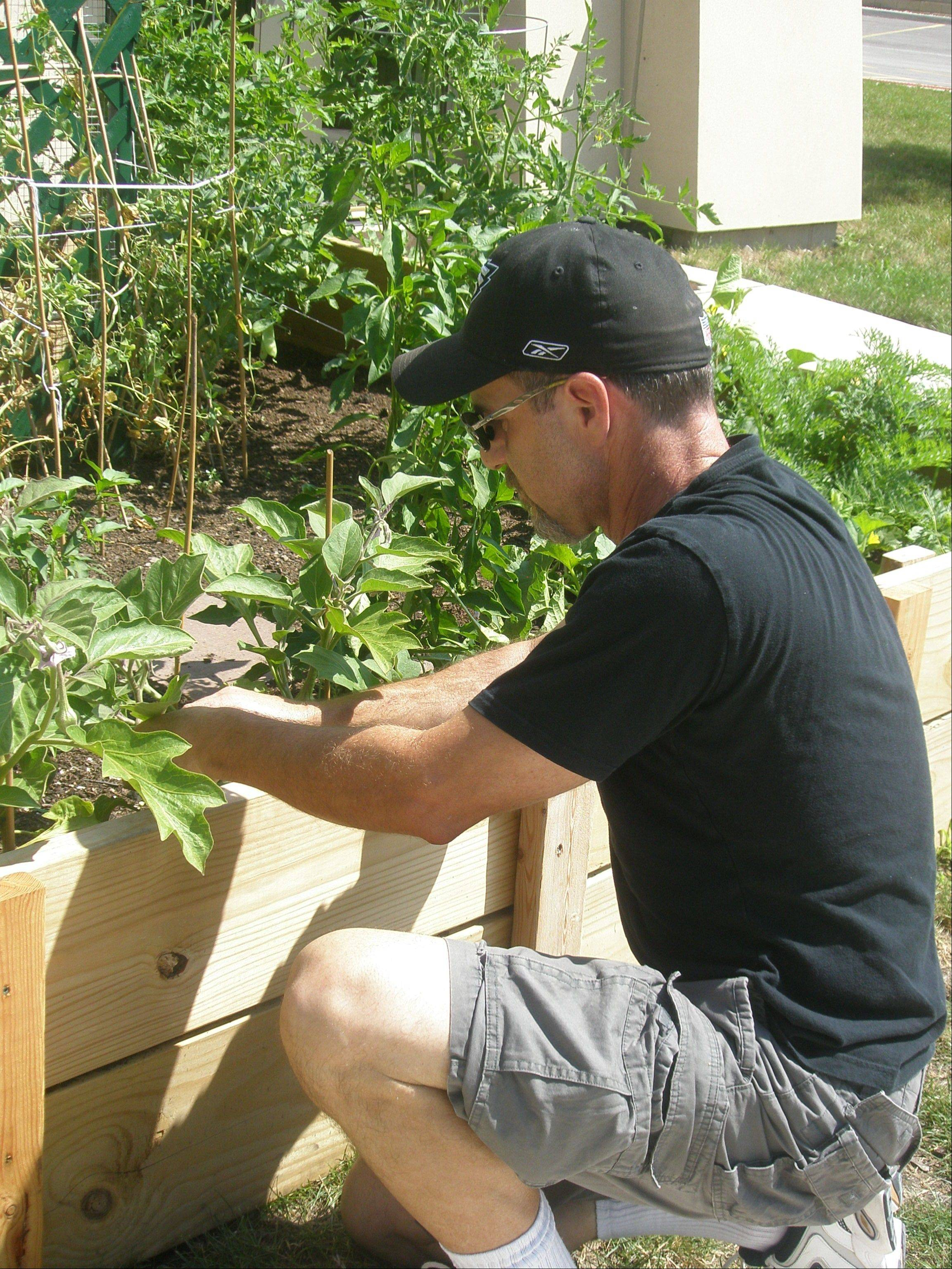 John Katz-Mariani of Vernon Hills tends the Mitzvah garden behind the Congregation Or Shalom community temple in Vernon Hills.