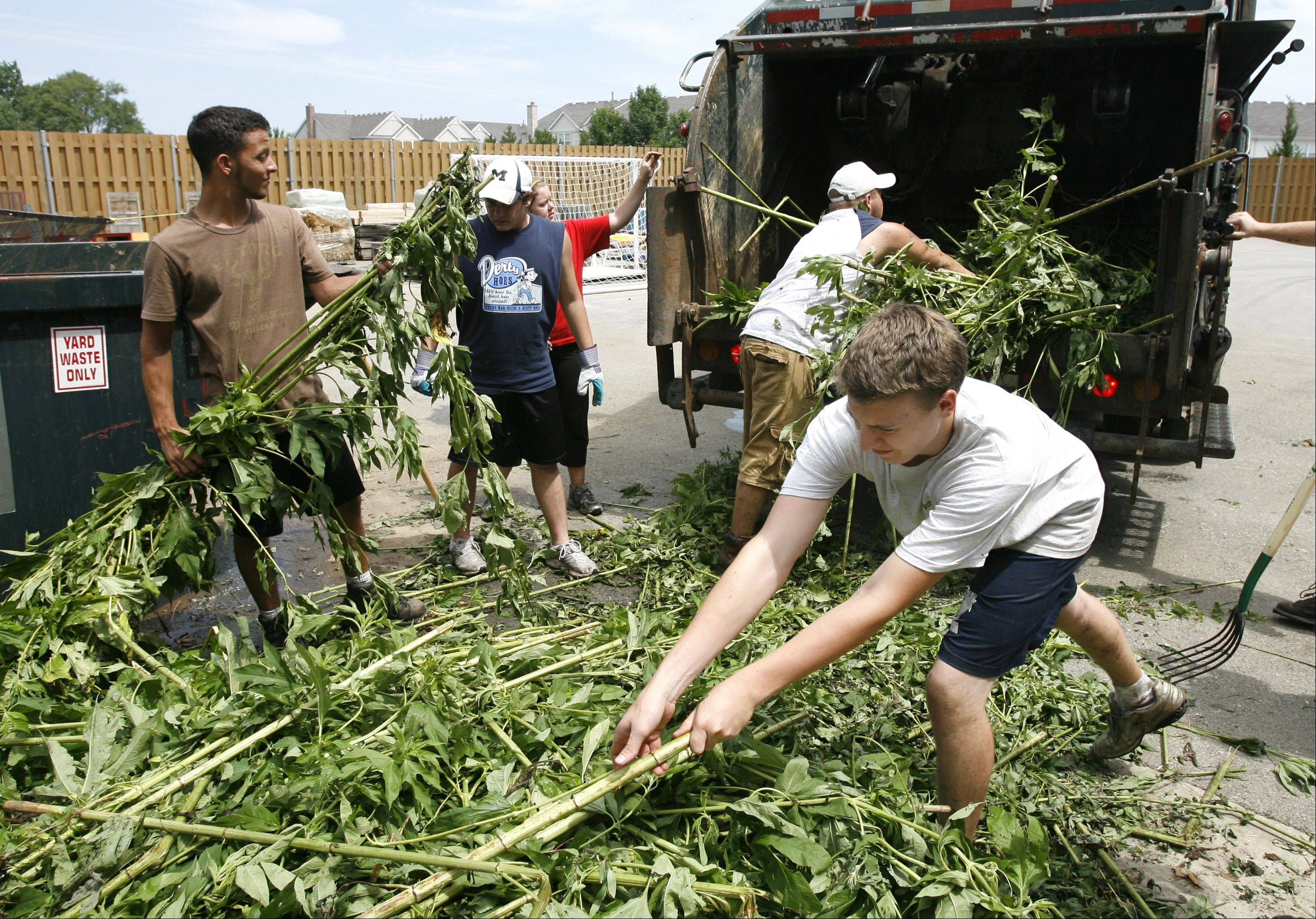 Roger Jenisch, right, is among hundreds of teens who found summer jobs in early July when about 70 park districts across the state received $2.3 million in grants to hire young workers. Jenisch recently worked with Tomaso Tenuta and Eric Thomason to remove brush from wetlands in Bloomingdale�s Springfield Park.