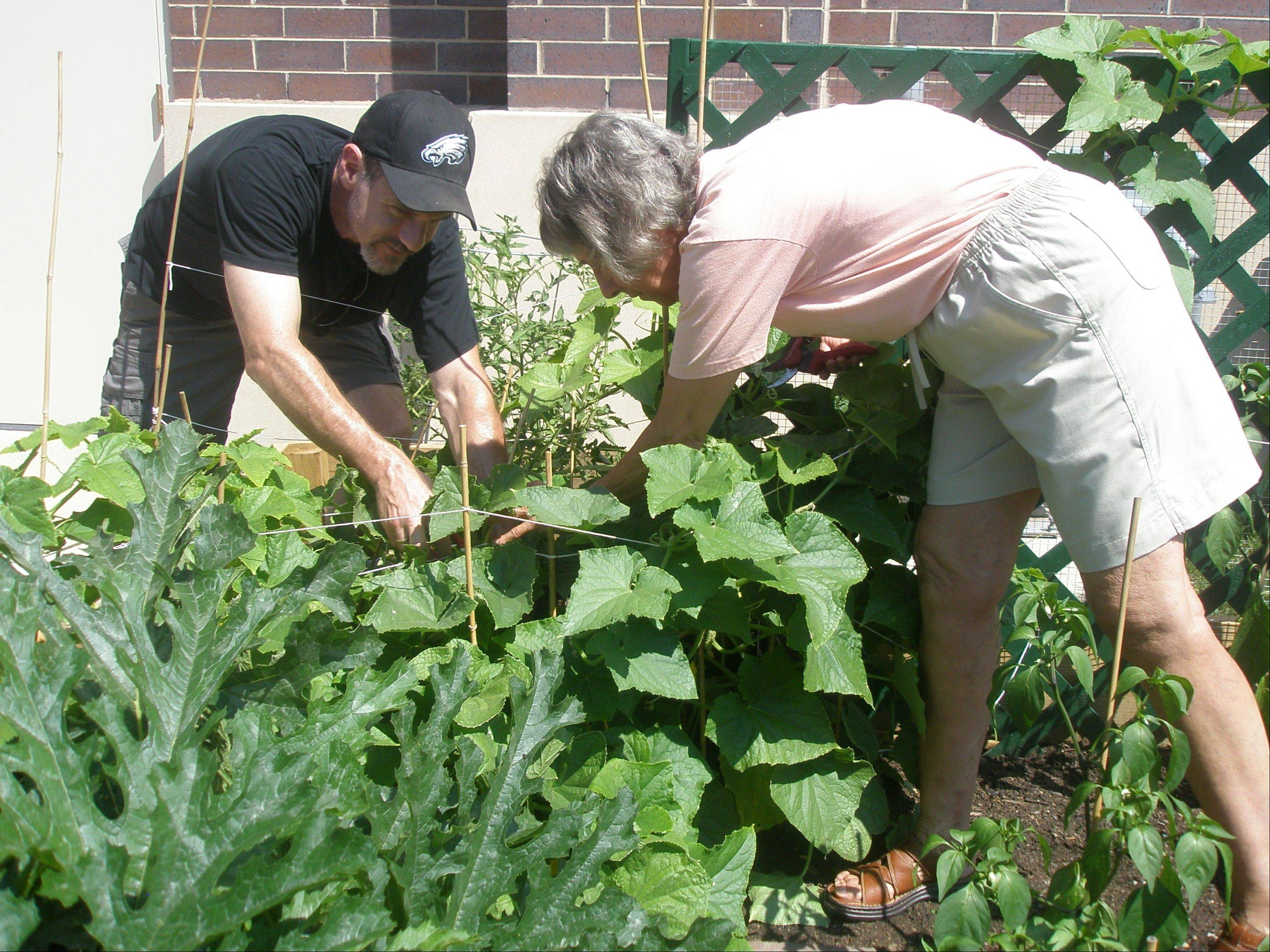 John Katz-Mariani and Sandi Epstein, both of Vernon Hills, tend a community garden at Congregation Or Shalom temple.