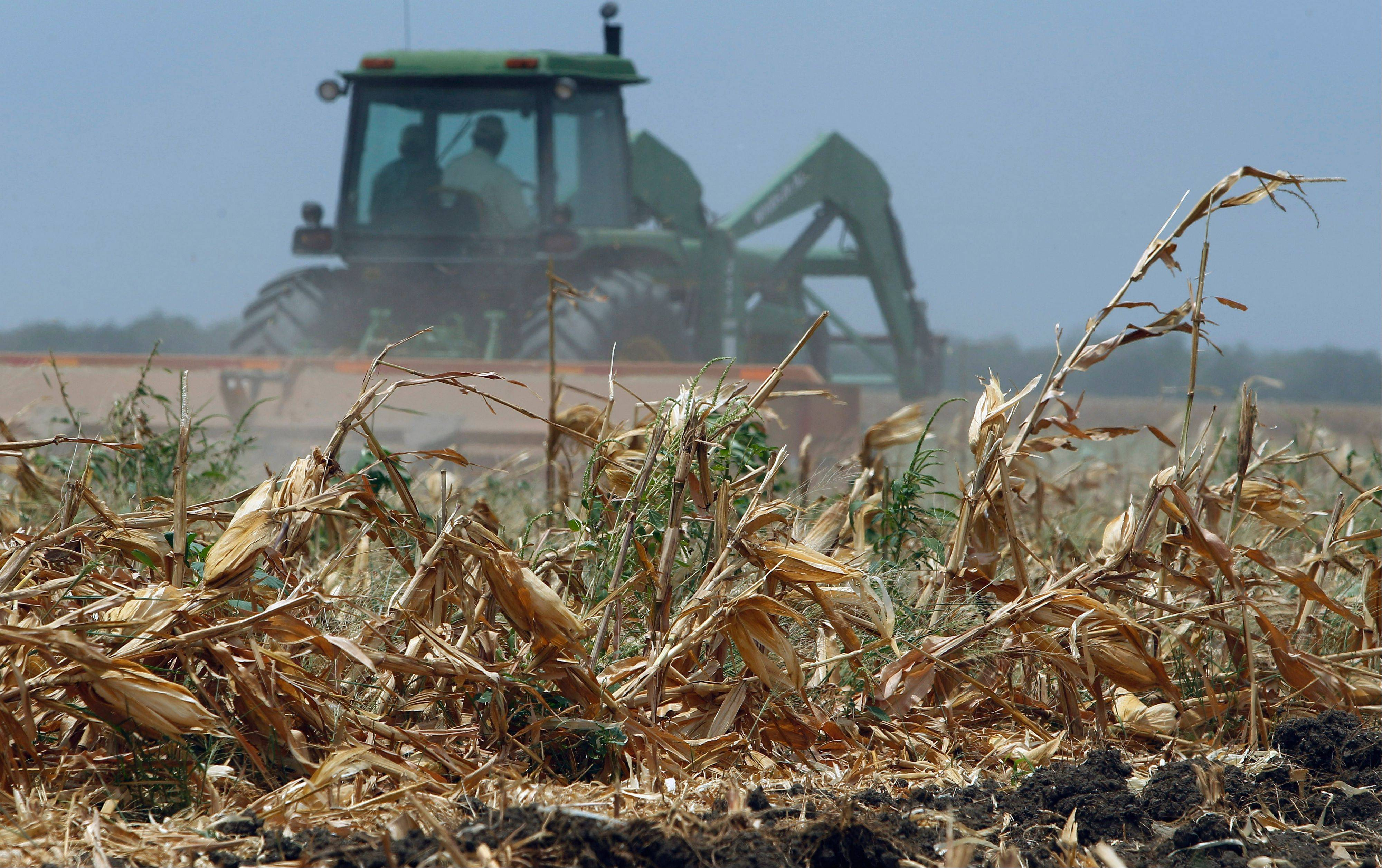 Associated Press/July 22 A tractor plows over a recently harvested corn field near Hondo, Texas. Agriculture officials say estimated crop and livestock losses from the blistering drought are a record $5.2 billion, and could go higher.