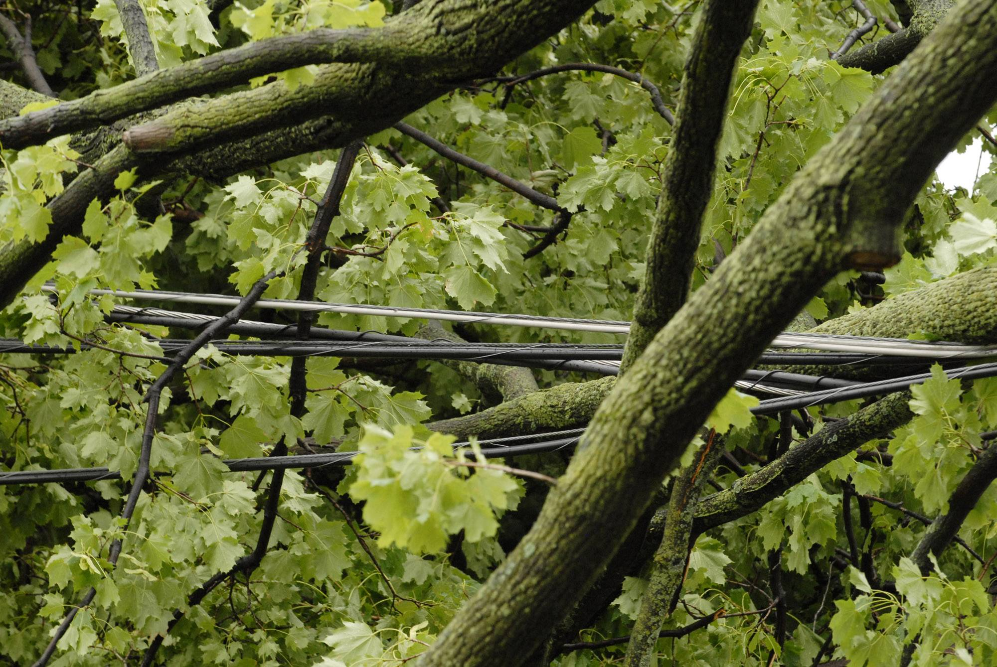 Downed power lines such as these,  and the speed at which they were restored, were among the complaints Comed officials heard from Rolling Meadows residents..