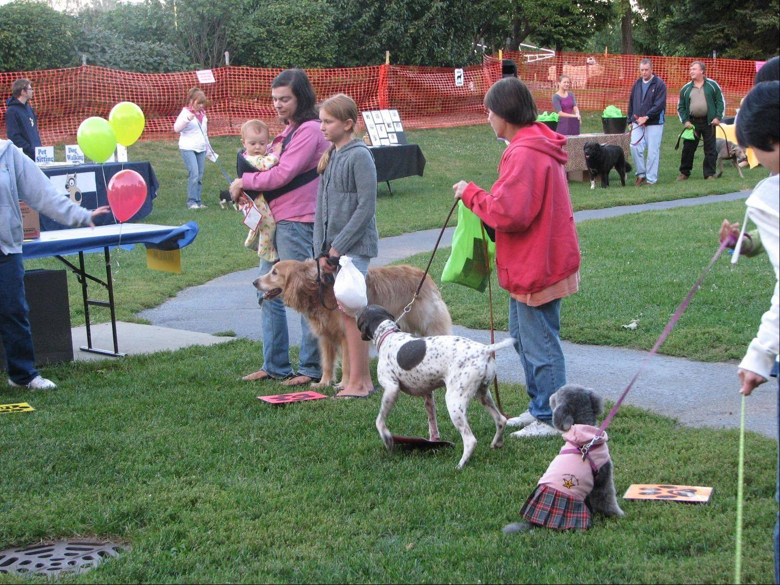 Dogs of all different breeds enjoyed the Canine Carnival last year.