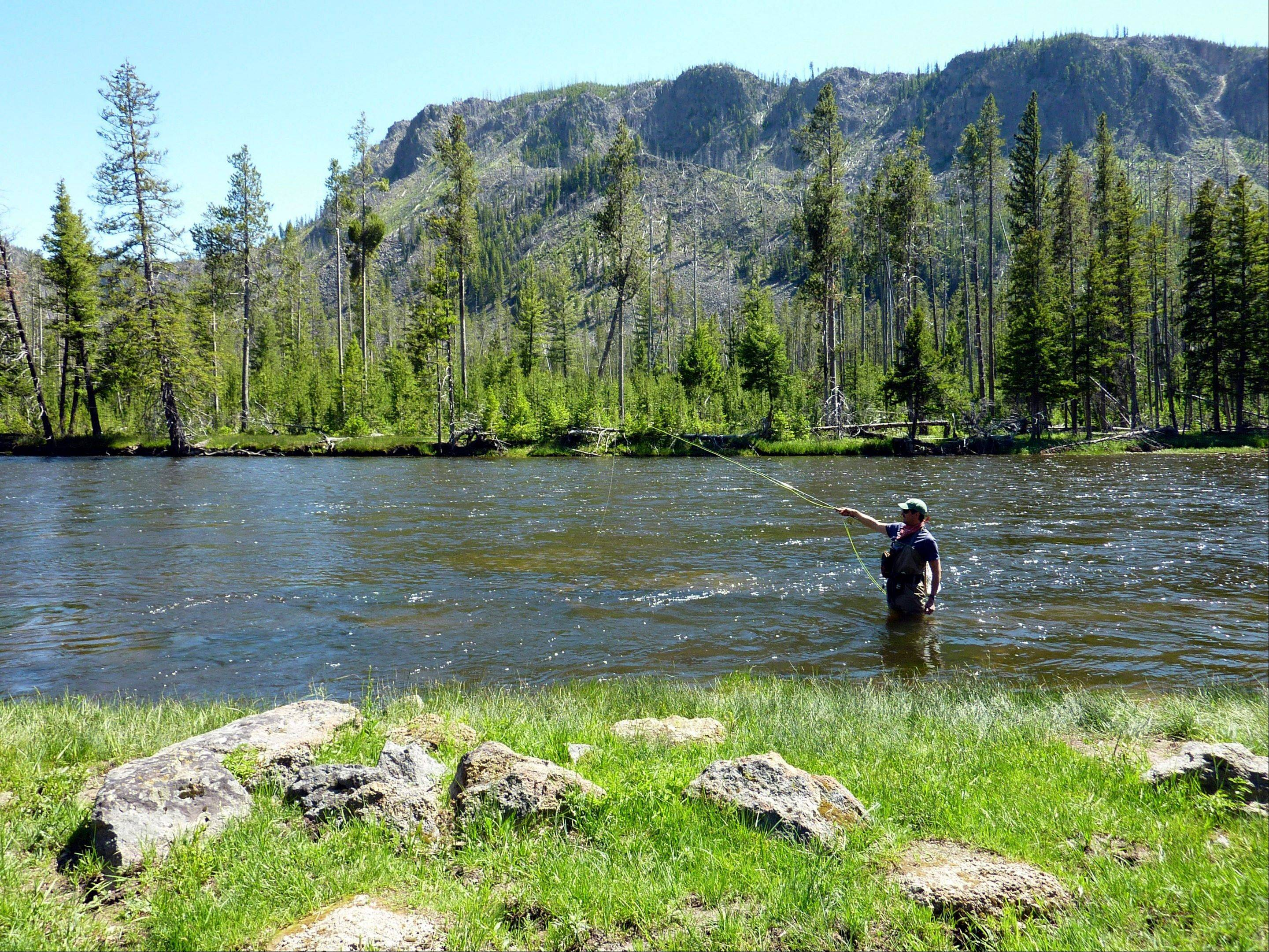 Desmond Butler fishes the upper Madison River in Yellowstone National Park, Mont.