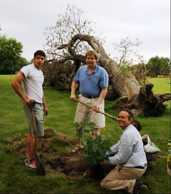 David Pivorunas from Washington, D.C., left, John Vytautas Prunskis and Owen Vytautas Prunskis plant the new oak tree in the Prunskis� back yard in Barrington. Their fallen tree is in the background. Pivorunas brought them the acorn of the famous Tvereciaus Oak Tree in Lithuania, from which the new tree was grown.