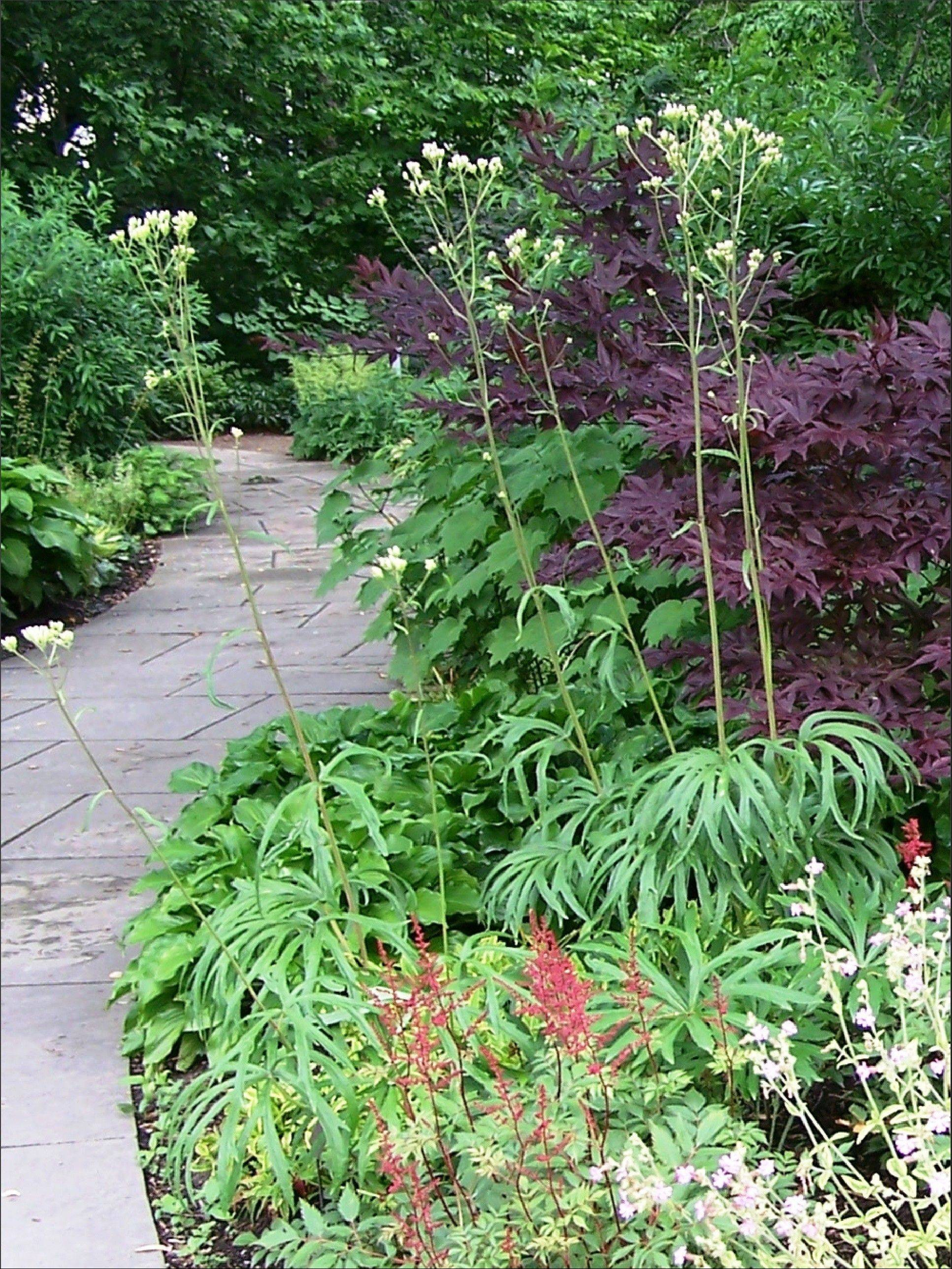 Now is a good time to look over your perennial bed to decide what you'd like to add.