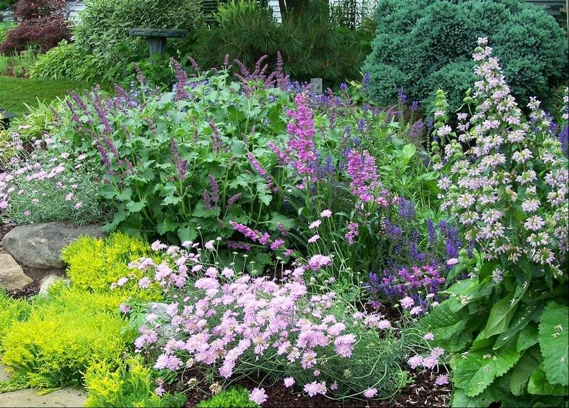 Art in the garden late summer is a good time to plant perennials its best to divide mature plants or transplant right after the plant is finished flowering mightylinksfo