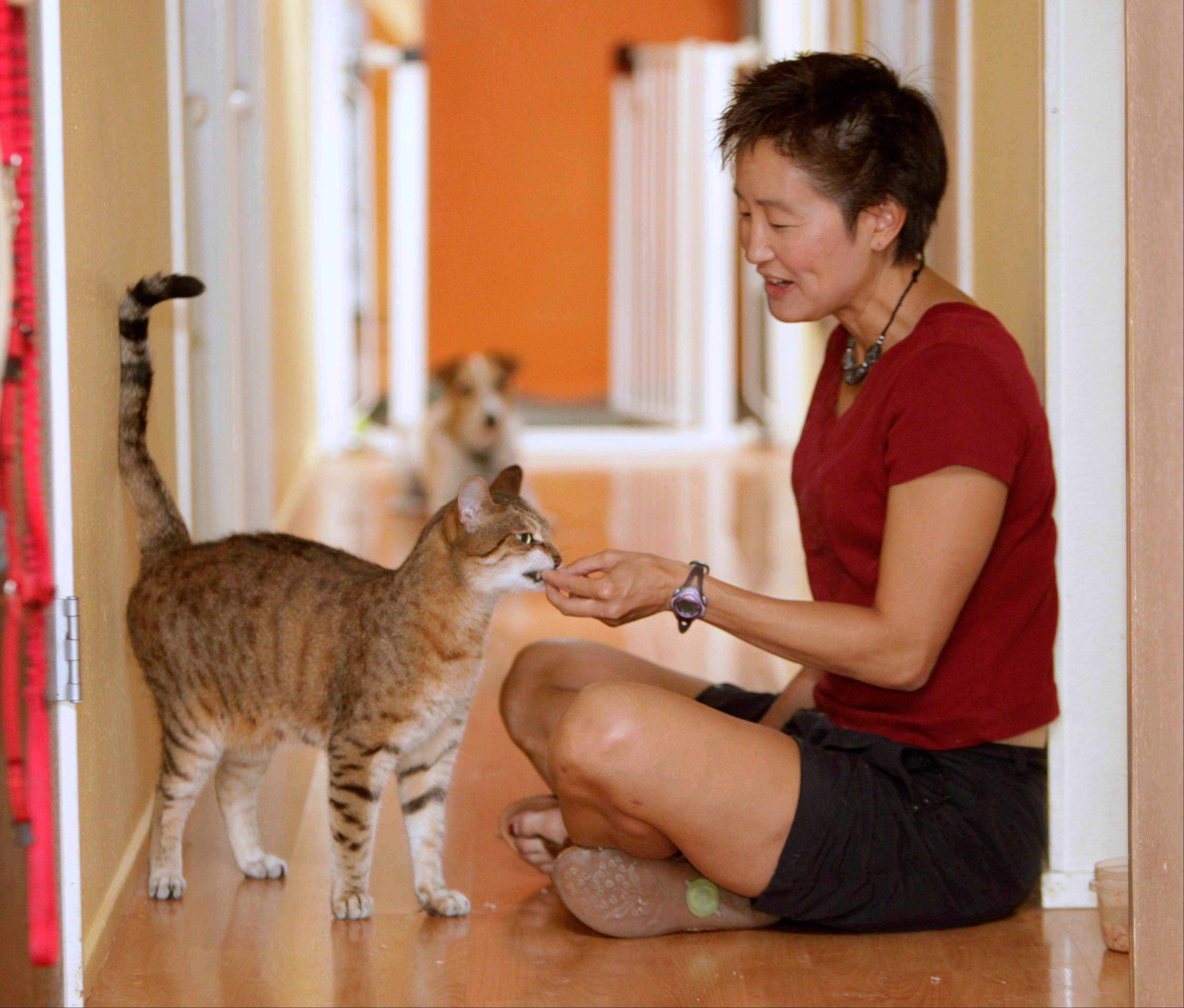 Dr. Sophia Yin, executive board member of the American Veterinary Society of Animal Behavior, rescued Dante and discovered he had spraying problems. Yin, who was able to cure Dante�s spraying, said that if a cat has been altered and has no health problems, spraying is a sign of stress and it�s up to you to figure out the cause.