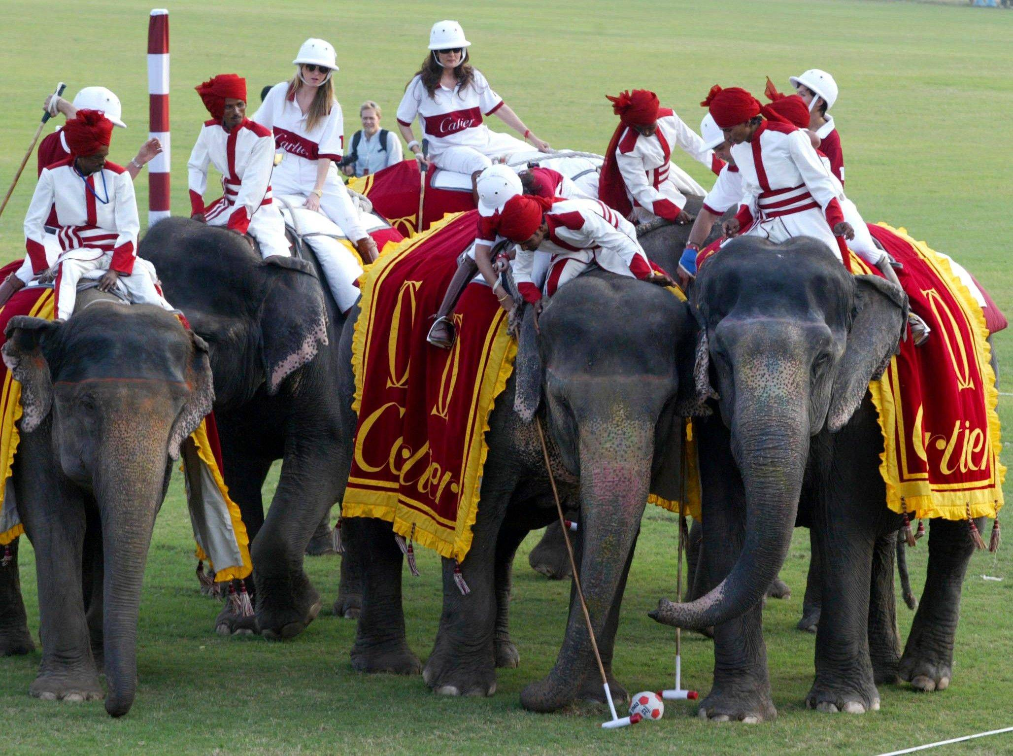 Celebrities participate in an elephant polo match in Jaipur in the Indian state of Rajasthan. An elephant polo match scheduled for Sunday, Aug. 21, 2011 in Jaipur has been canceled after animal rights activists objected that the sport was cruel to the animals.