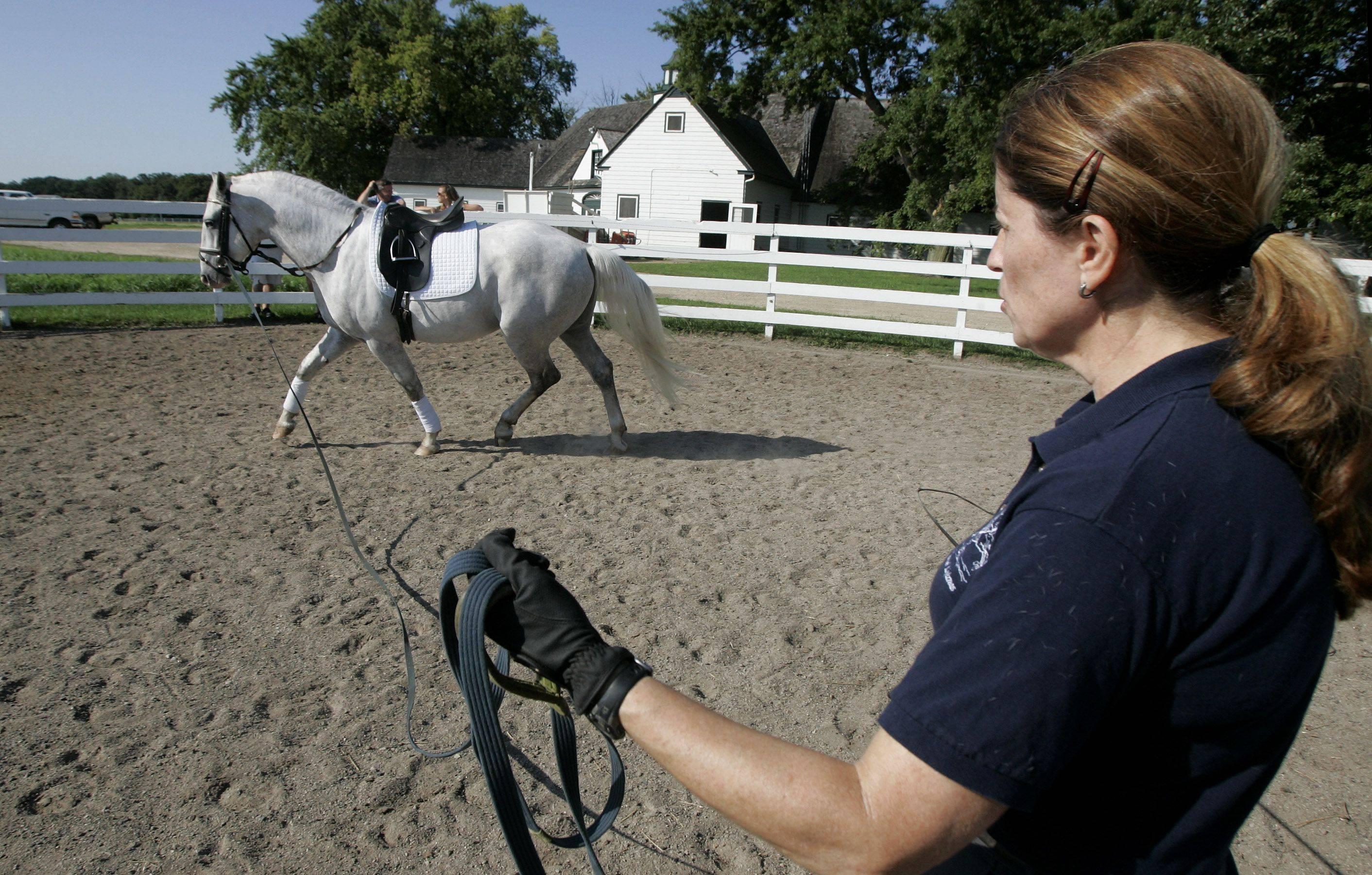 Dressage trainer Eliza Ardizzone works with four-year-old Favory VI Ivana on the long line as young horses are trained into talented stallions at Tempel Farms in Old Mill Creek. The organization has taken this season off for the purpose of breeding and training their horses.