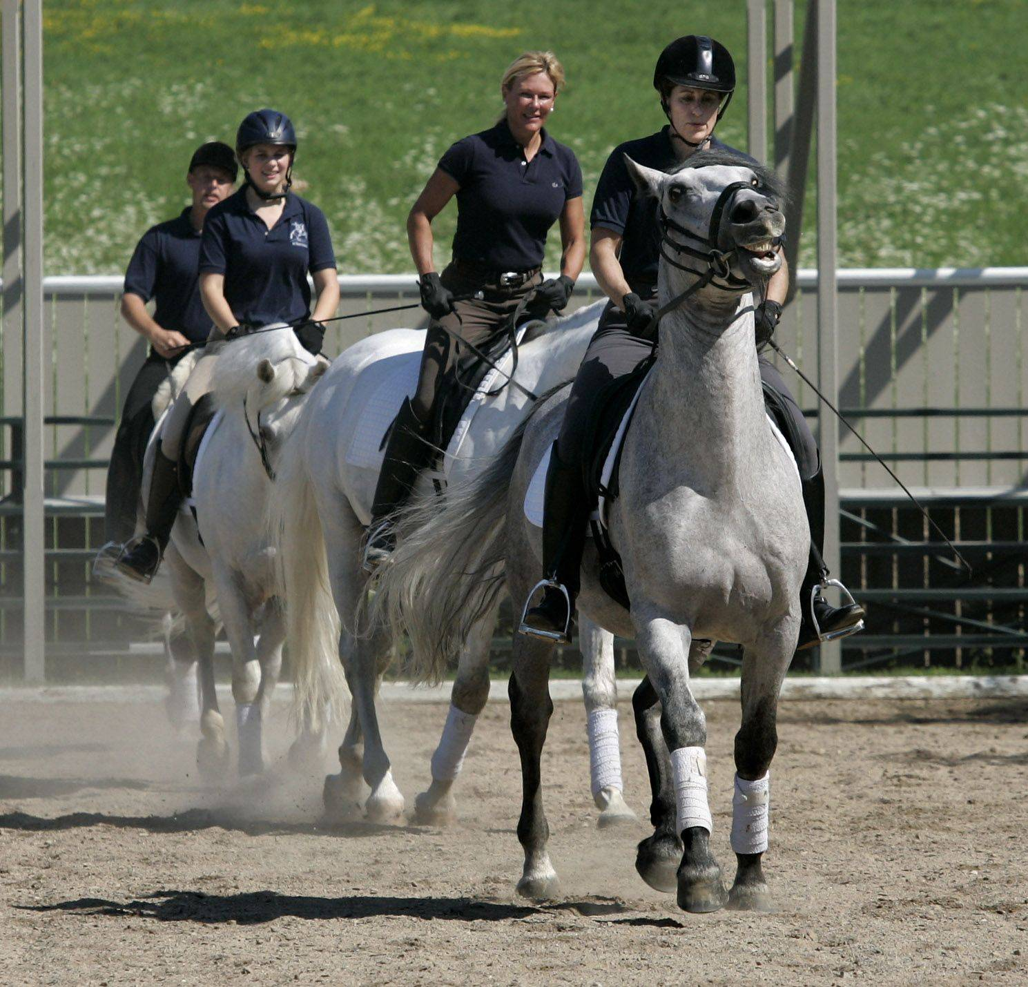 Eliza Ardizzone on five-year-old Conversano Mima Barbara leads a group of the young Lipizzan stallions in training as they practice the Quadrille in the performance ring.