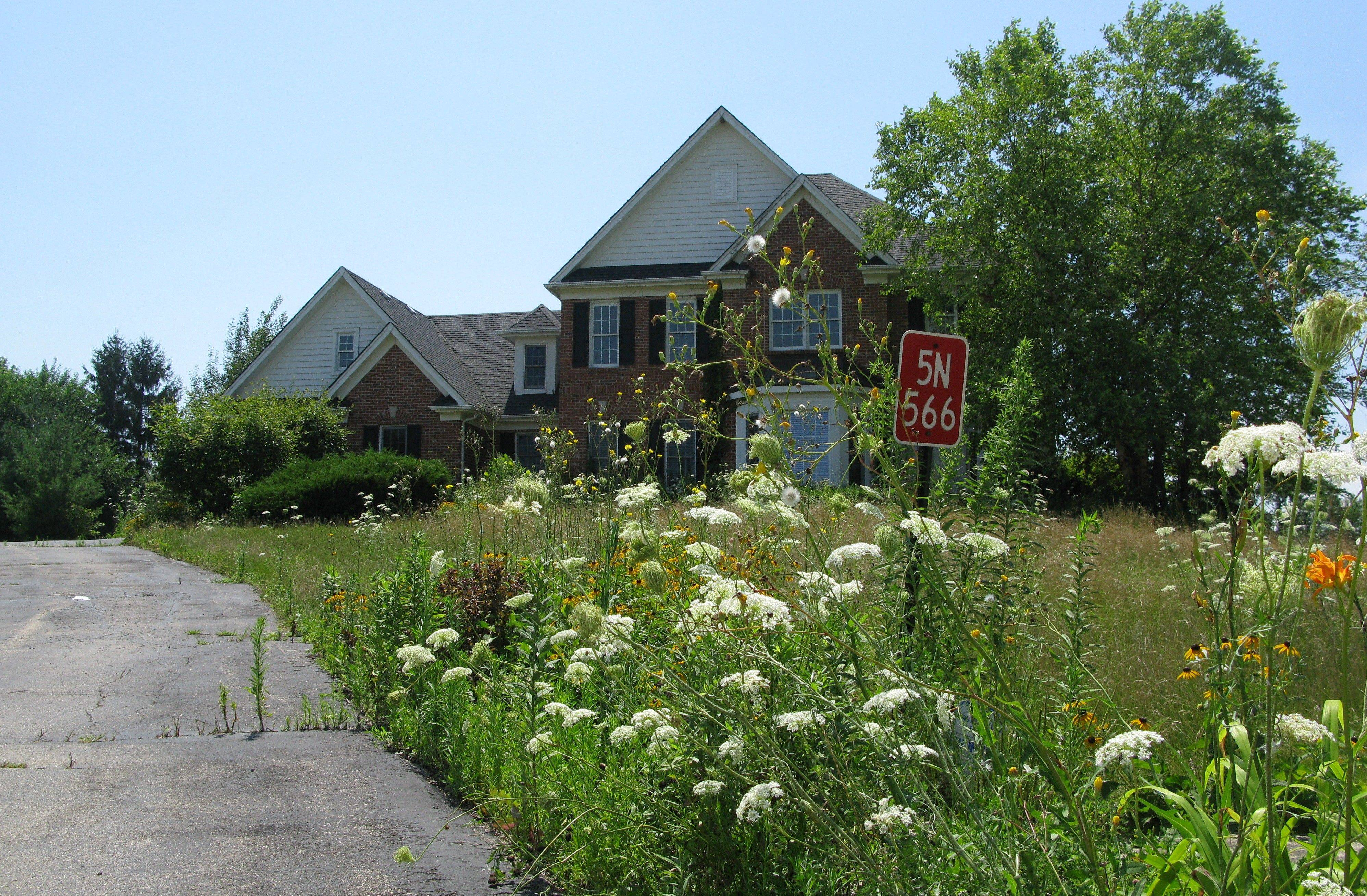 The vacant property in St. Charles is overgrown with foliage, bugs and varmints.