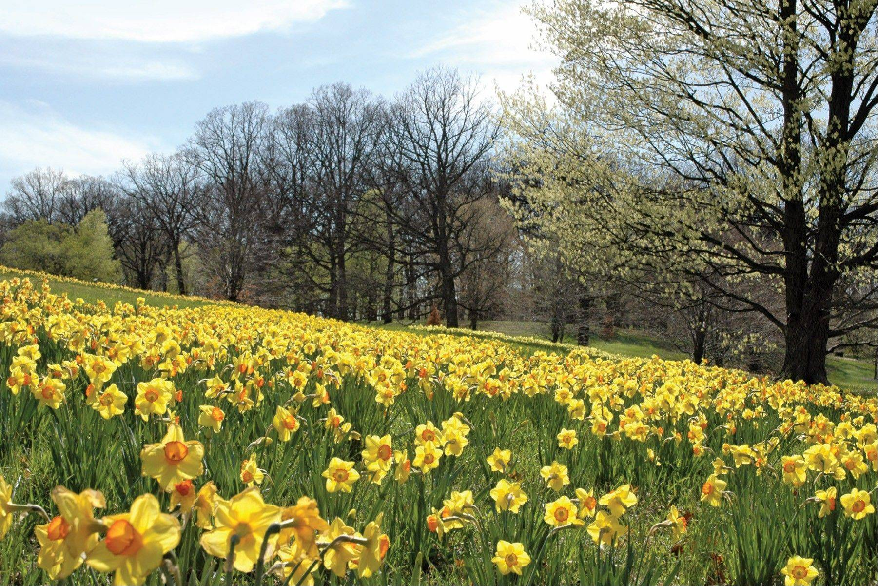 Once available in stores and restaurants, postcards now are found most often at tourist destinations or used for marketing. Morton Arboretum has just released a new series of four cards highlighting the four seasons on the Lisle museum's grounds.