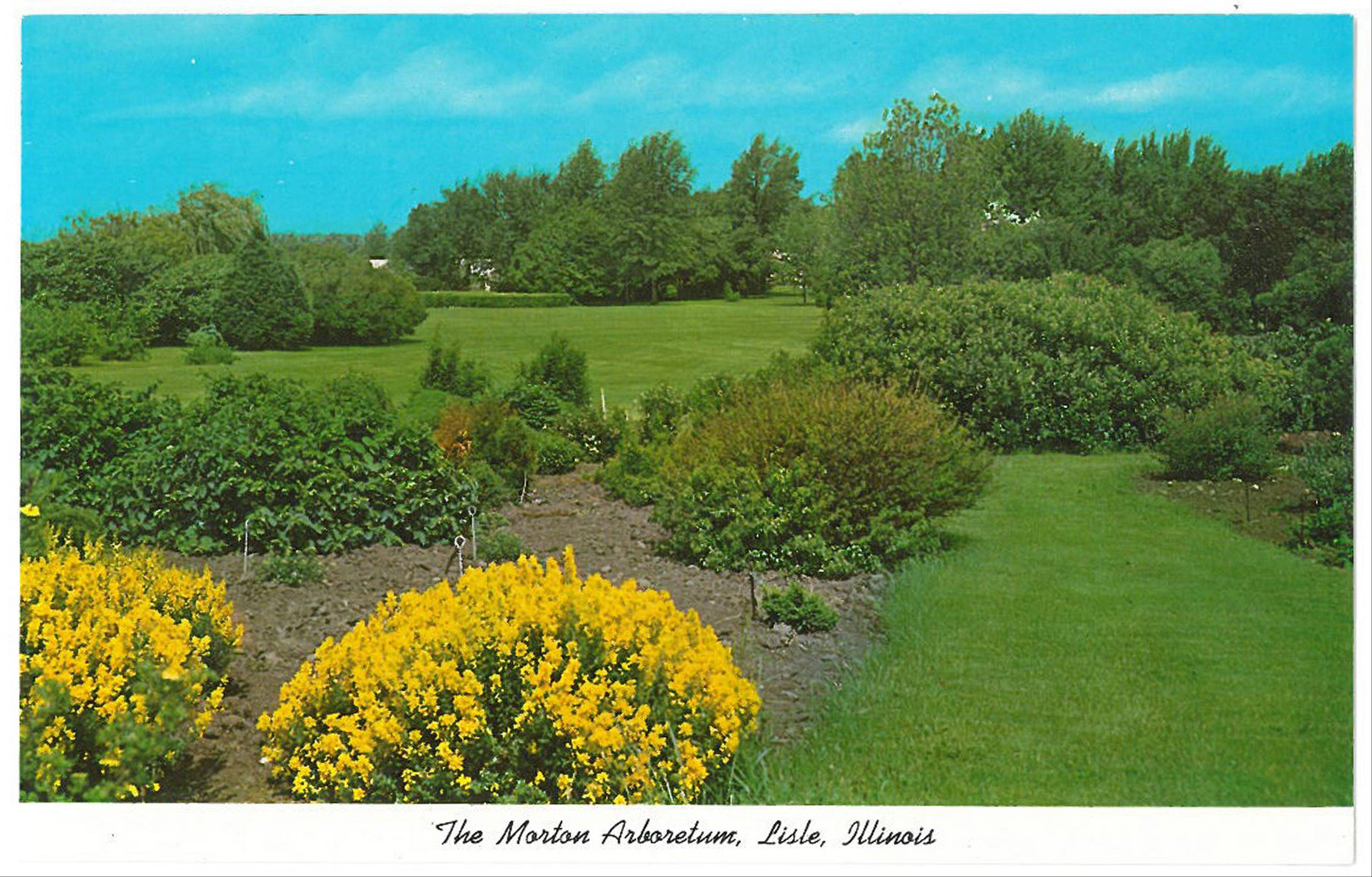 The image of Morton Arboretum's grounds from 1966 still could serve as a memento from a modern-day outing.