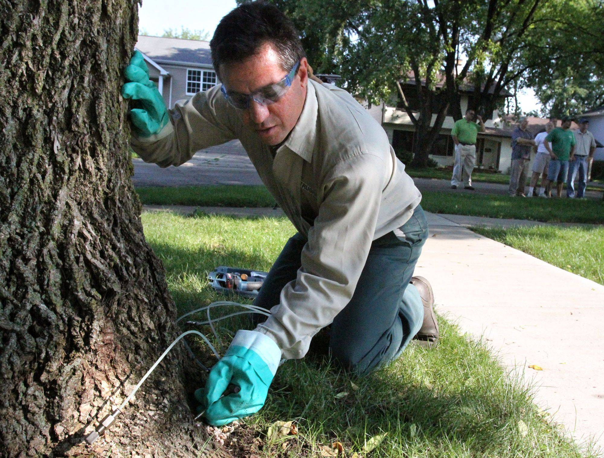 As concerned residents look on, Ron Levinson, a master certified arborist with TruGreen in West Chicago, injects an ash tree trunk with treatment for emerald ash borer at Redwood Lane and West Country Road in Bartlett.