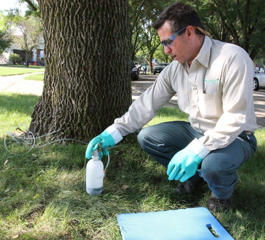Ron Levinson, a master certified arborist with TruGreen in West Chicago, pushes the inject button to release treatment for emerald ash borer into an ash tree trunk at Redwood Lane and West Country Road in Bartlett.