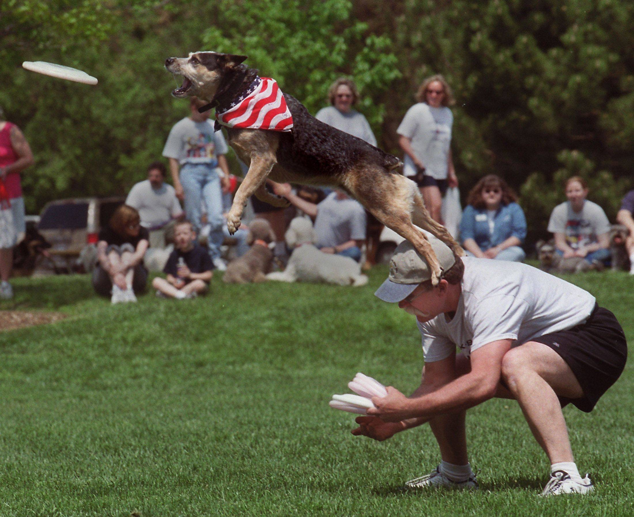 Disc dogs from across the globe will compete in Naperville Saturday to qualify for two major world championships.