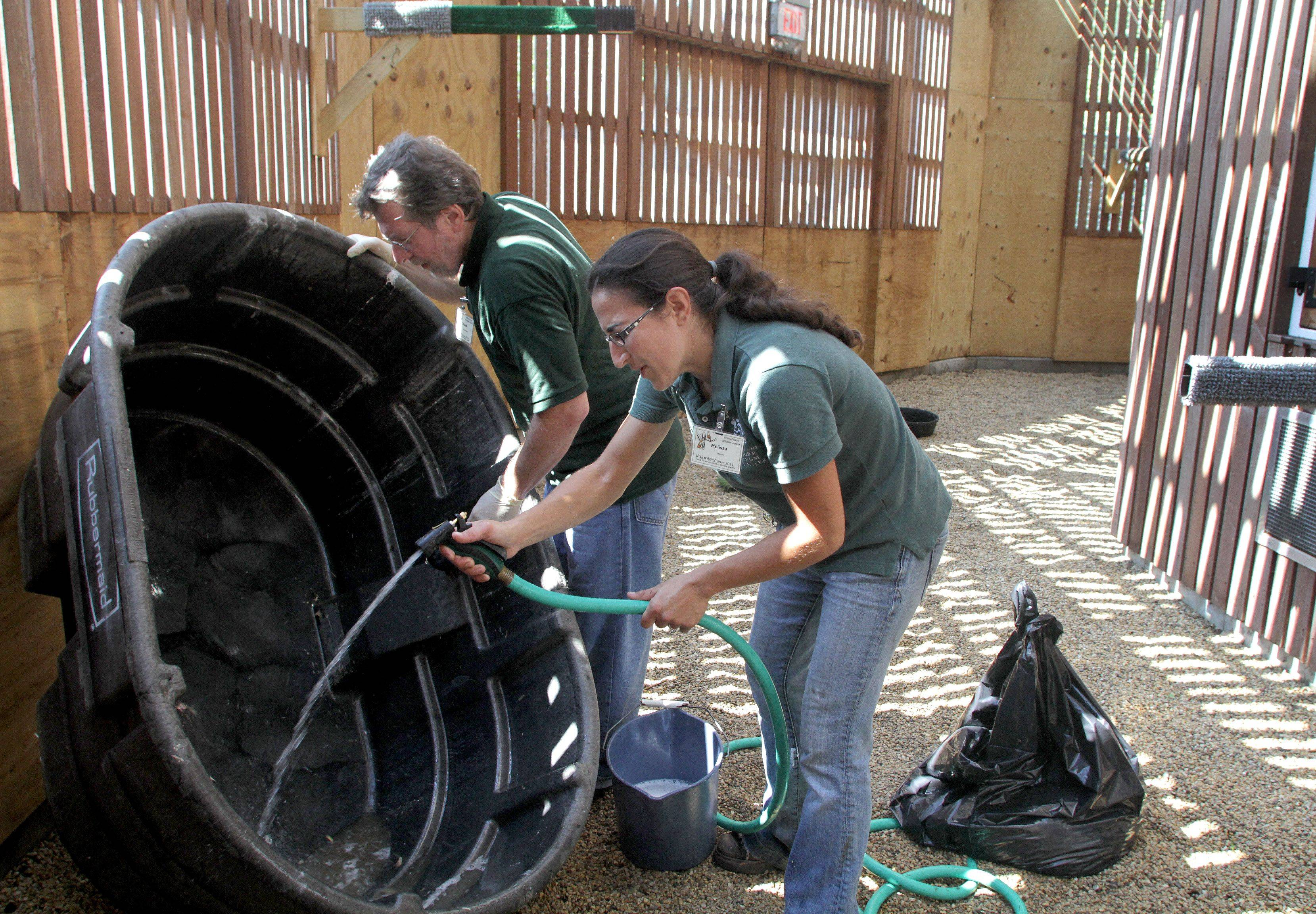 Animal care volunteers Chuck Sylvester and Melissa Monno clean out a tub in the Raptor Flight Facility at the Willowbrook Wildlife Center in Glen Ellyn. The center has up to 100 active volunteers at any given time in the animal care department.