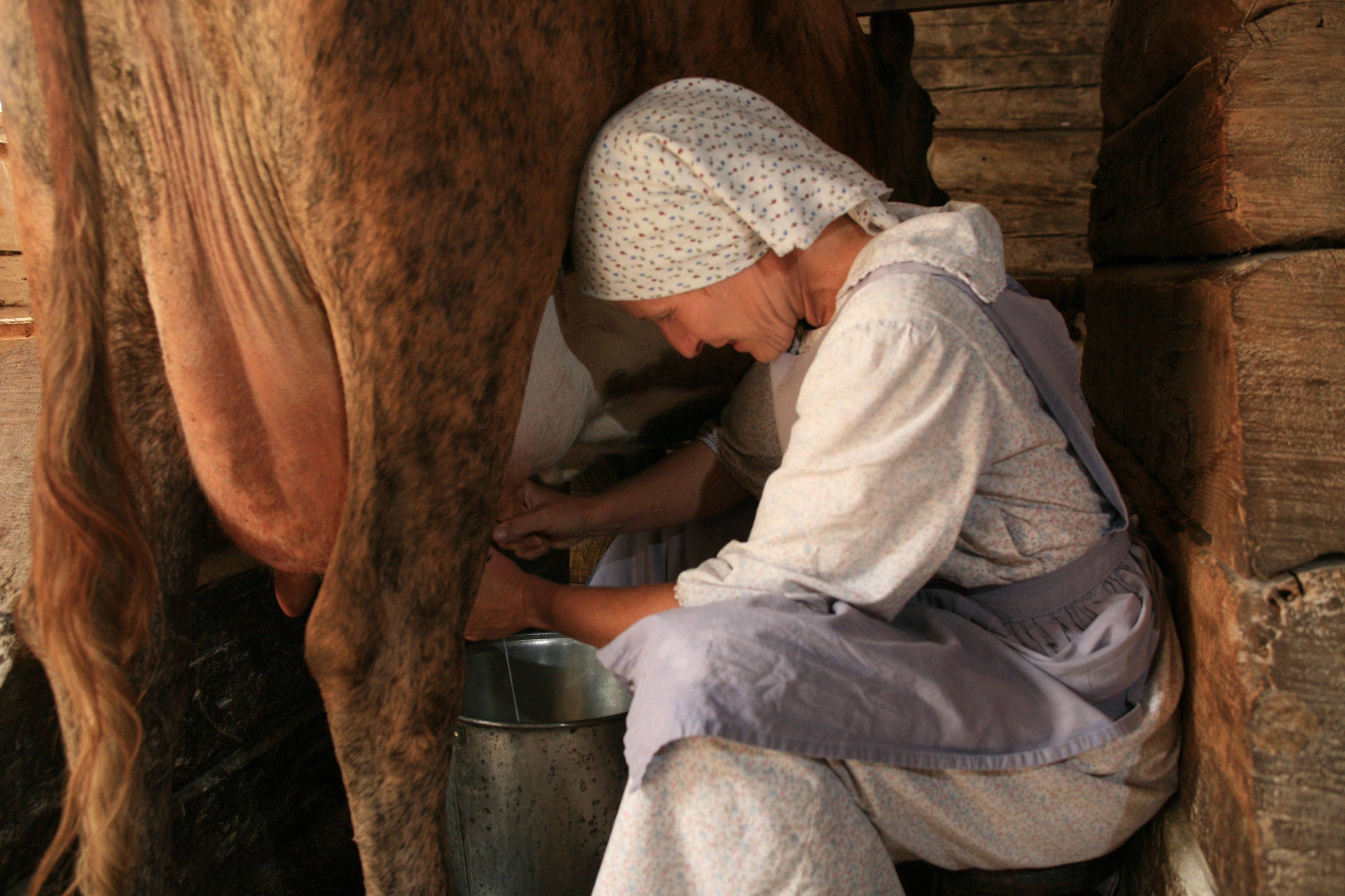 Old World Wisconsin will host �Saturdays in September� featuring a variety of activities including cow milking.