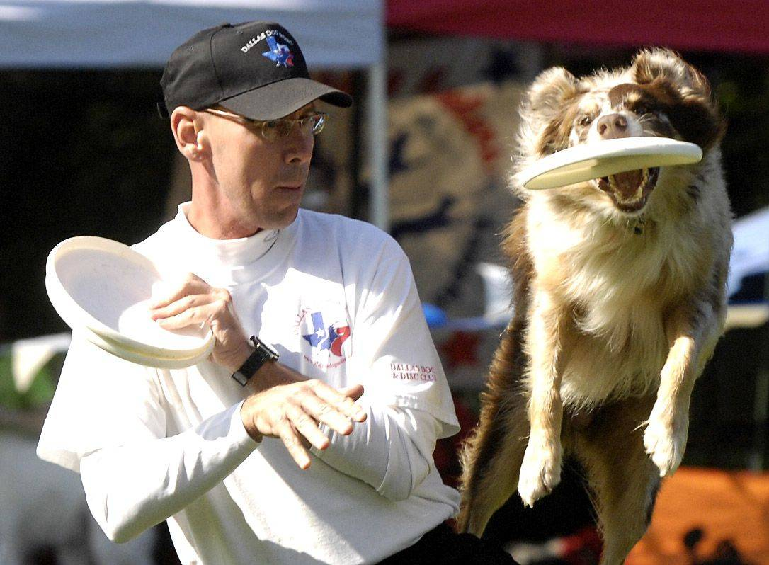 Chuck Middleton of Dallas and his dog, Bam Bam, compete in the Ashley Whippet Invitational World Qualifier dog disc competition Sunday during Naperville�s Last Fling.