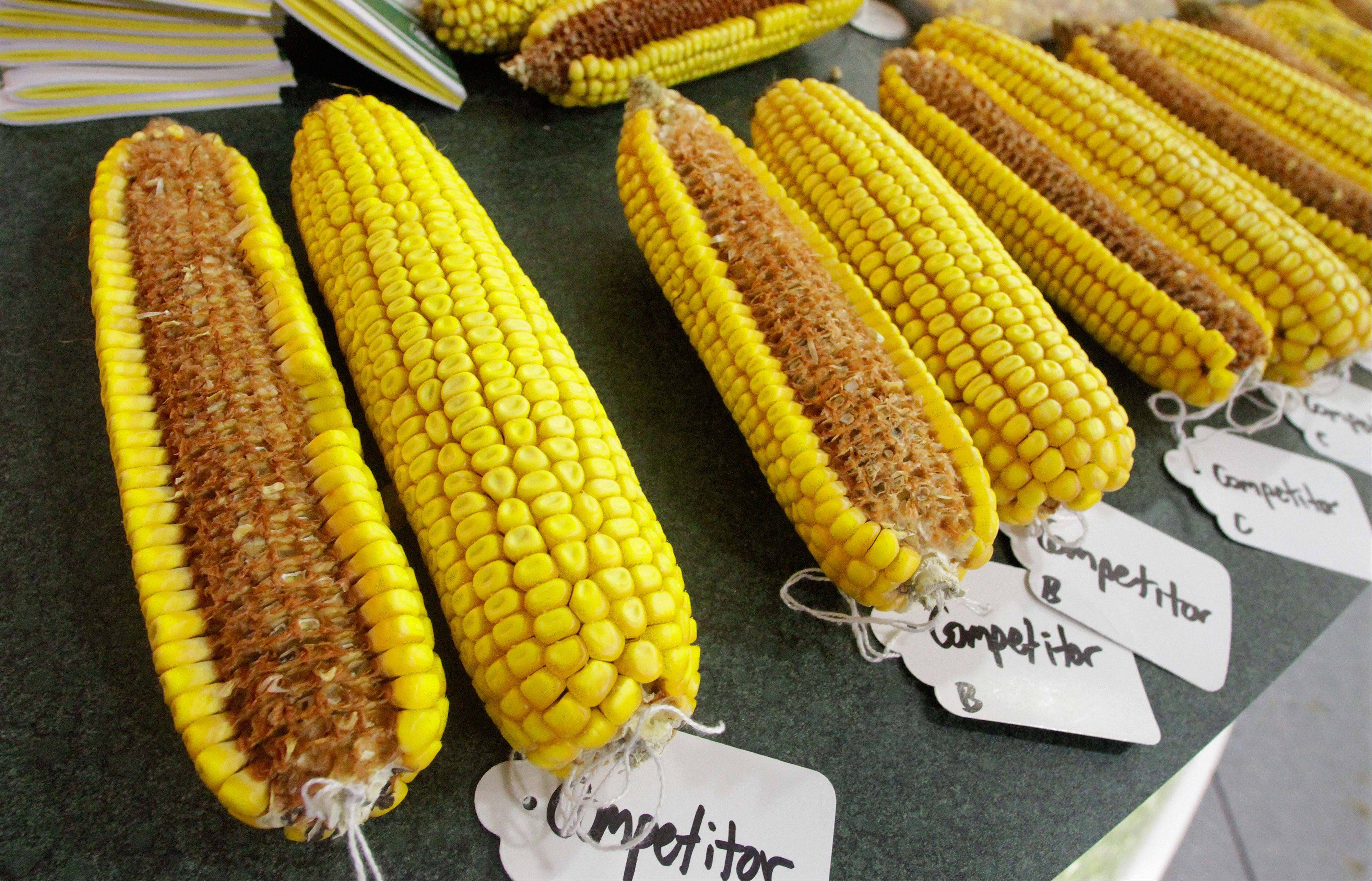Corn from various seed companies is displayed in a Pioneer seed exhibit booth during the Farm Progress Show in Decatur. Tens of thousands of farmers from the Midwest and beyond are gathered for the agricultural trade this year.