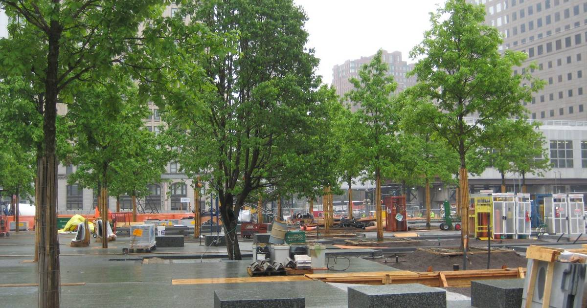 Lady Of The Wayside >> Images: Arlington Heights man grew oaks for ground zero monument