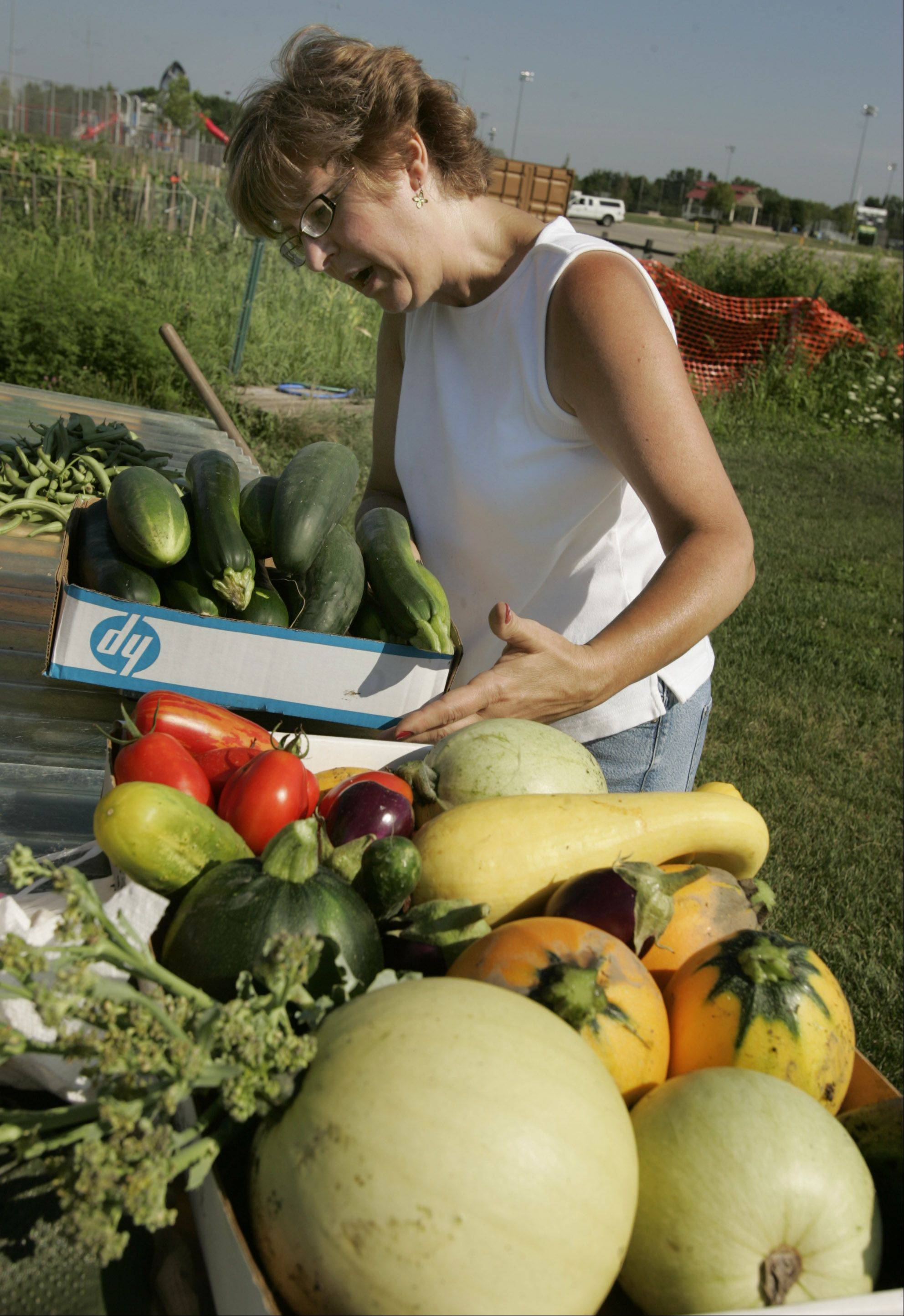 DuPage County Master Gardener Pam Kowalczyk collects produce from a garden for local food pantries. Master Gardeners this year are tending a garden near the Kraft plant in Naperville.