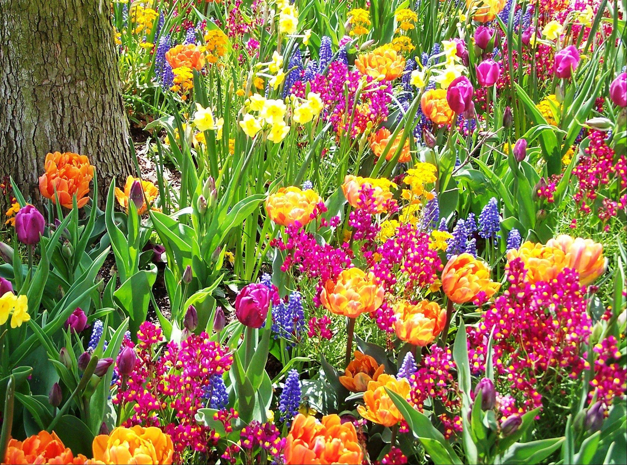 Choosing bulbs from each category of bloom time will give you a continuous show of color in the spring.
