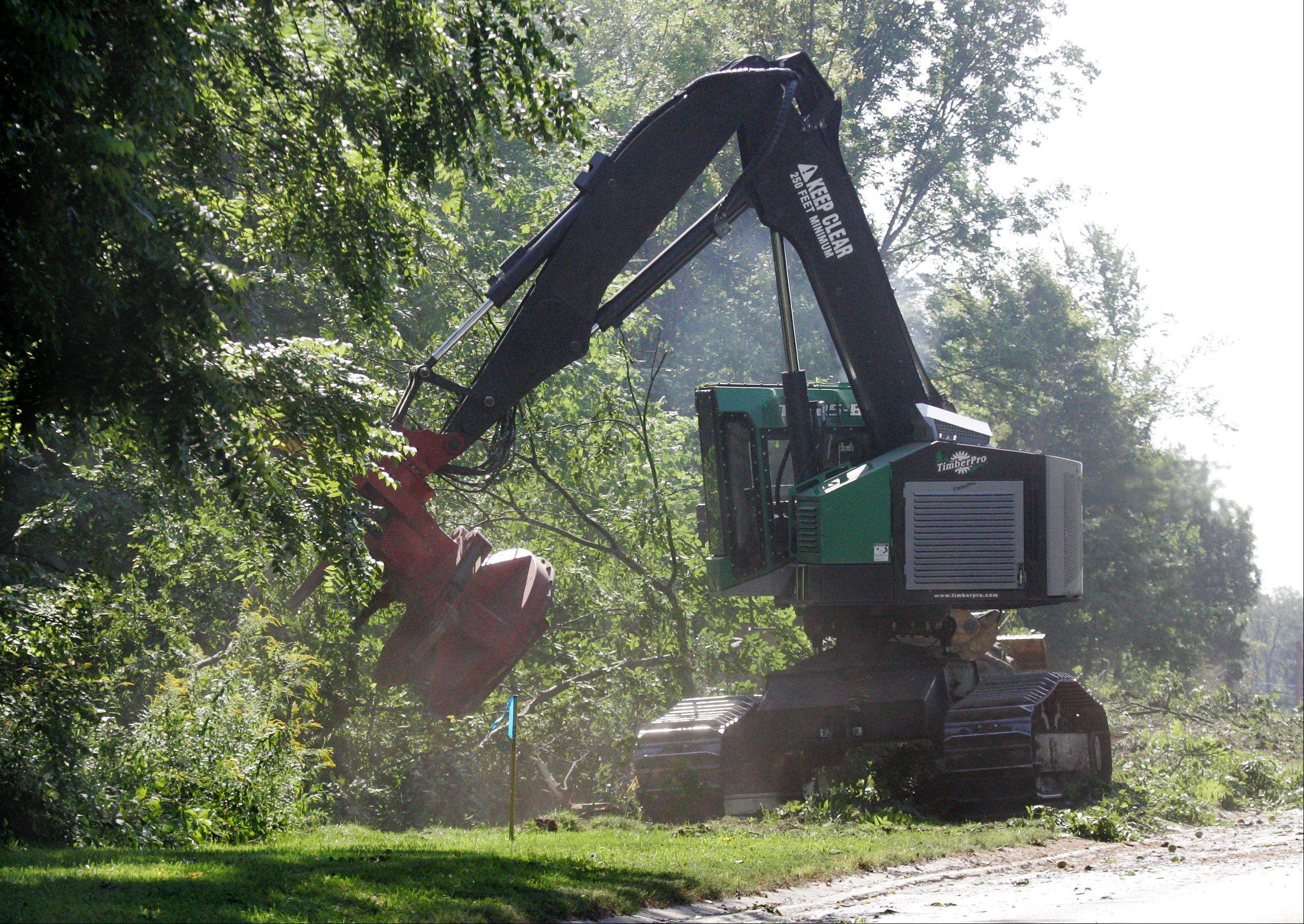 Equipment cuts down a tree as crews from Clean Cut Tree Service begin removing trees Monday along Milwaukee Avenue north of Route 137 in Libertyville.