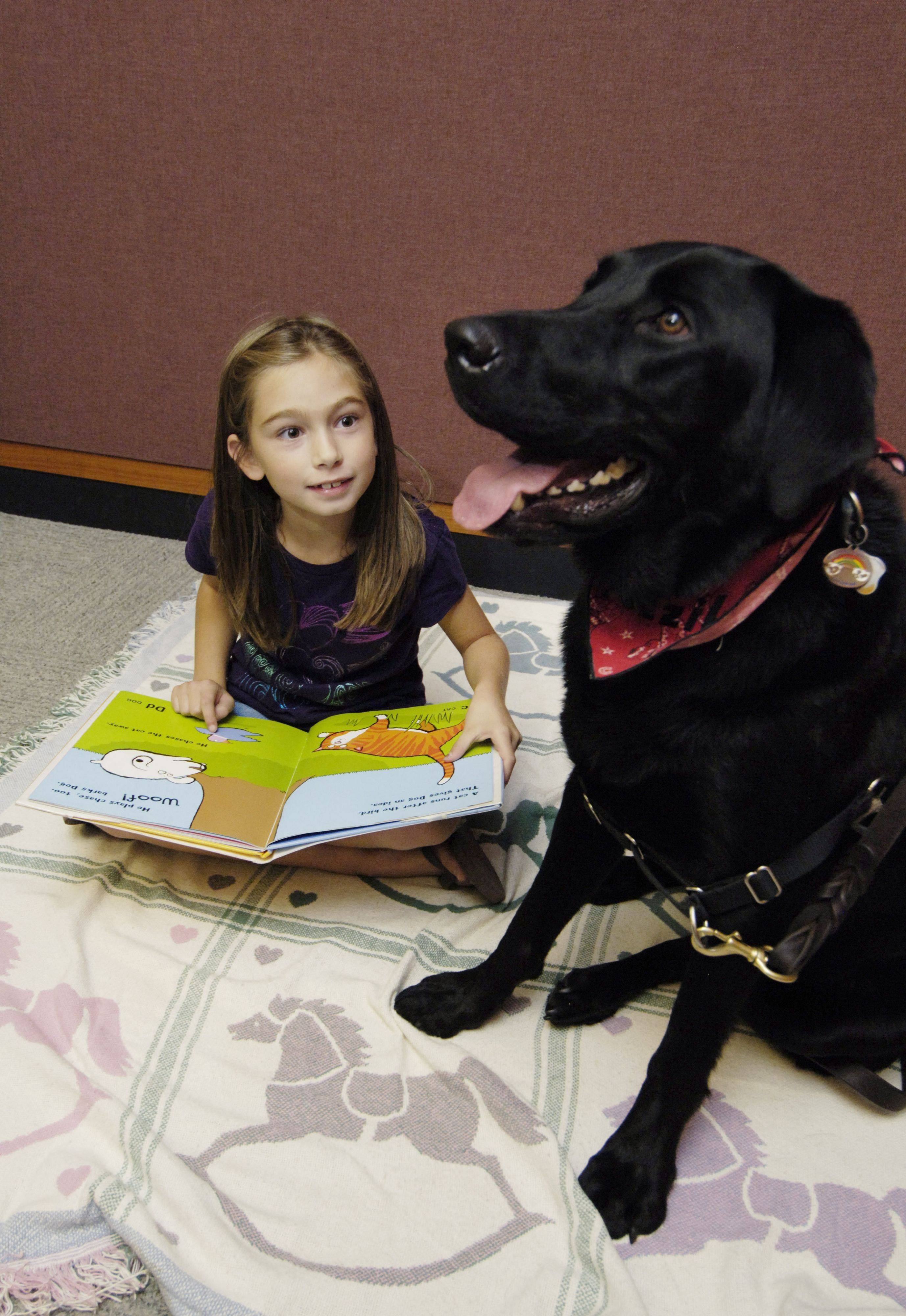 Janelle Gartz, 7, of Mount Prospect reads to Fezzik, a black lab and trained therapy dog, at the Mount Prospect Public Library.