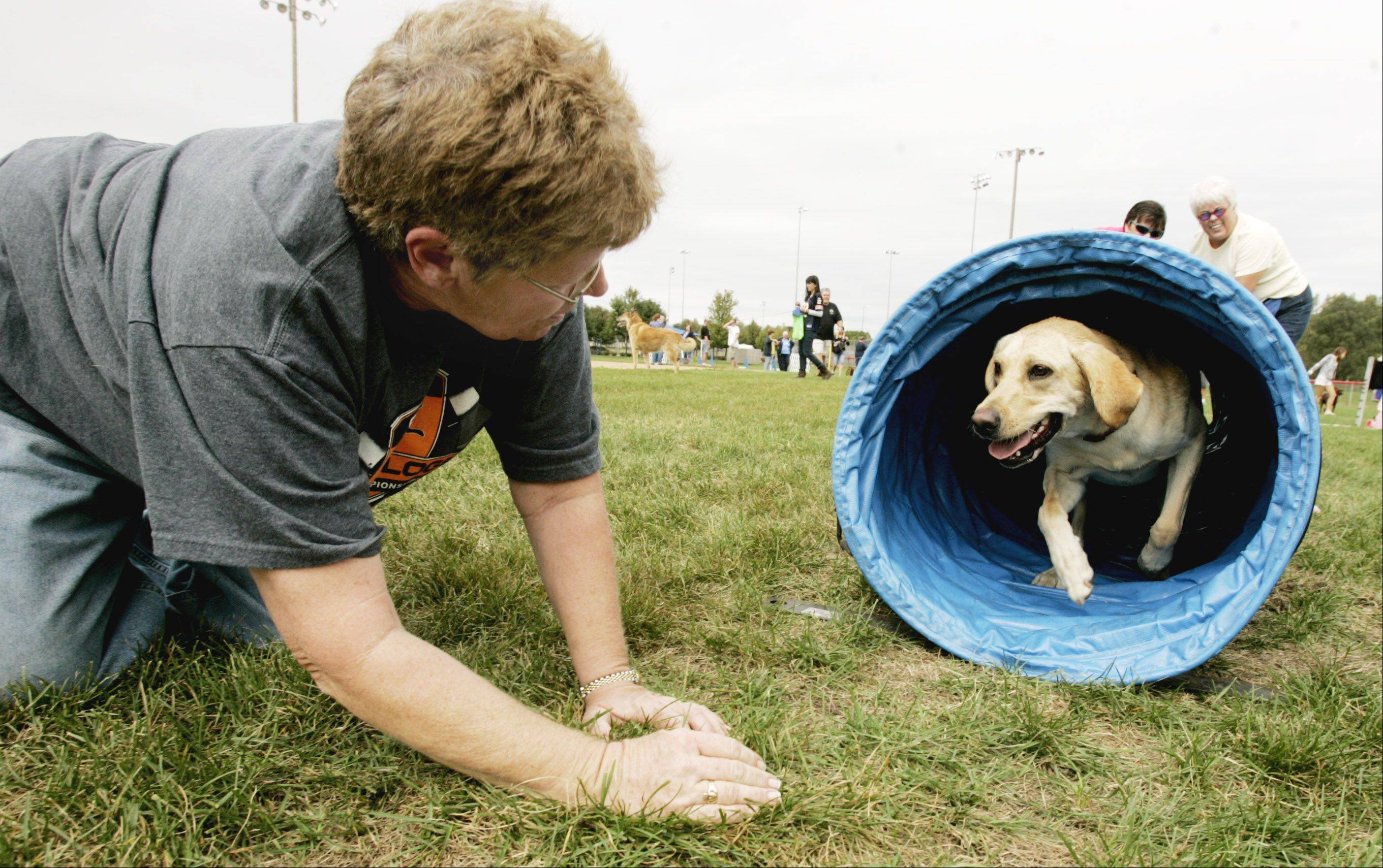 Maureen Lydon of Chicago waits for her dog, Molly, as she going through an agility tunnel last year at the CSBarks festival at Armstrong Park.