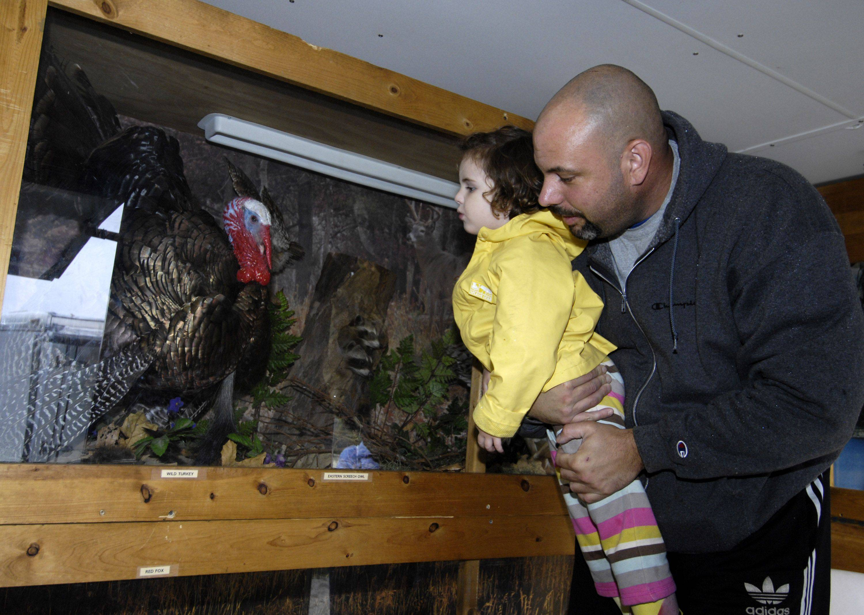 Betsy Facchini, 2, of Lombard, is lifted up by her dad, Bill, as they look at native animals in the Illinois Department of Natural Resources mobile Wildlife Education trailer Sunday. The trailer was a feature at Prairie Days at Terrace View Park, sponsored by the Lombard Park District and the Lombard Garden Club.