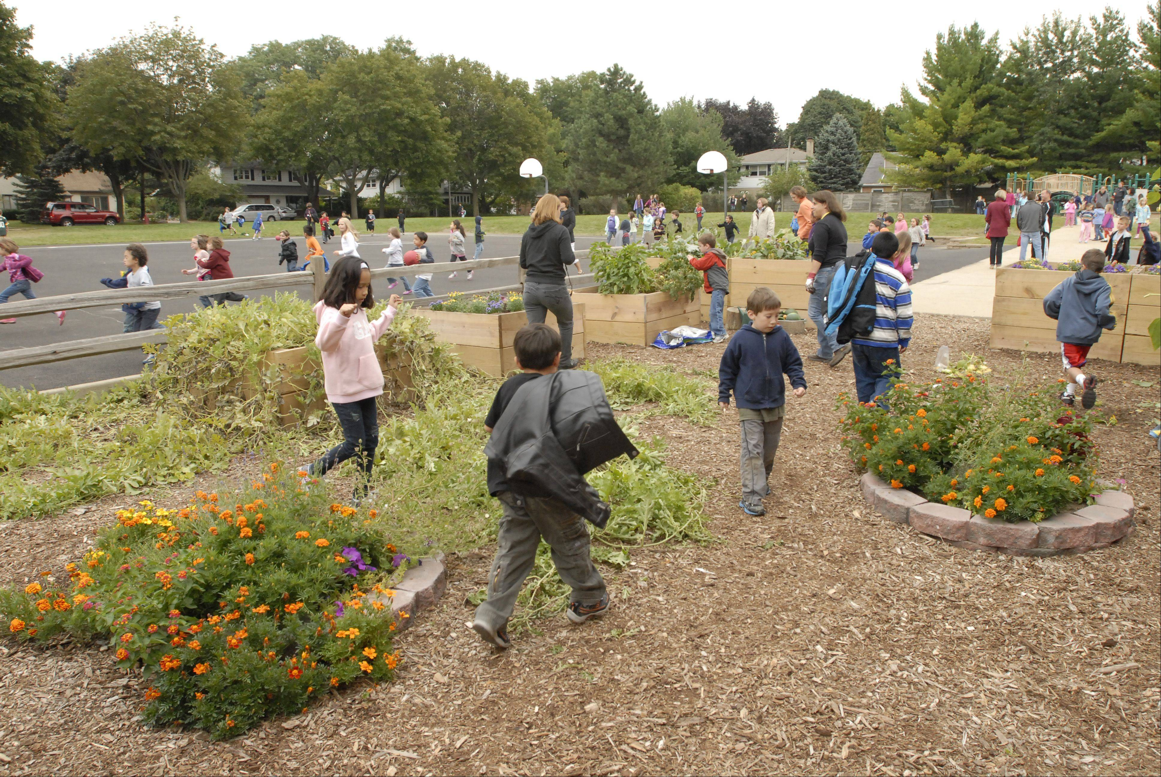 The garden at Windsor Elementary School in Arlington Heights has many workers.