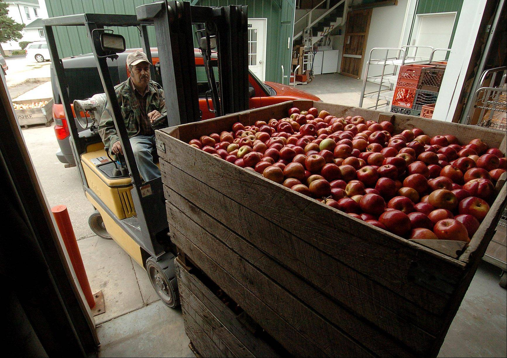Manuel Rivera brings in a bin of apples to be processed into apple cider.