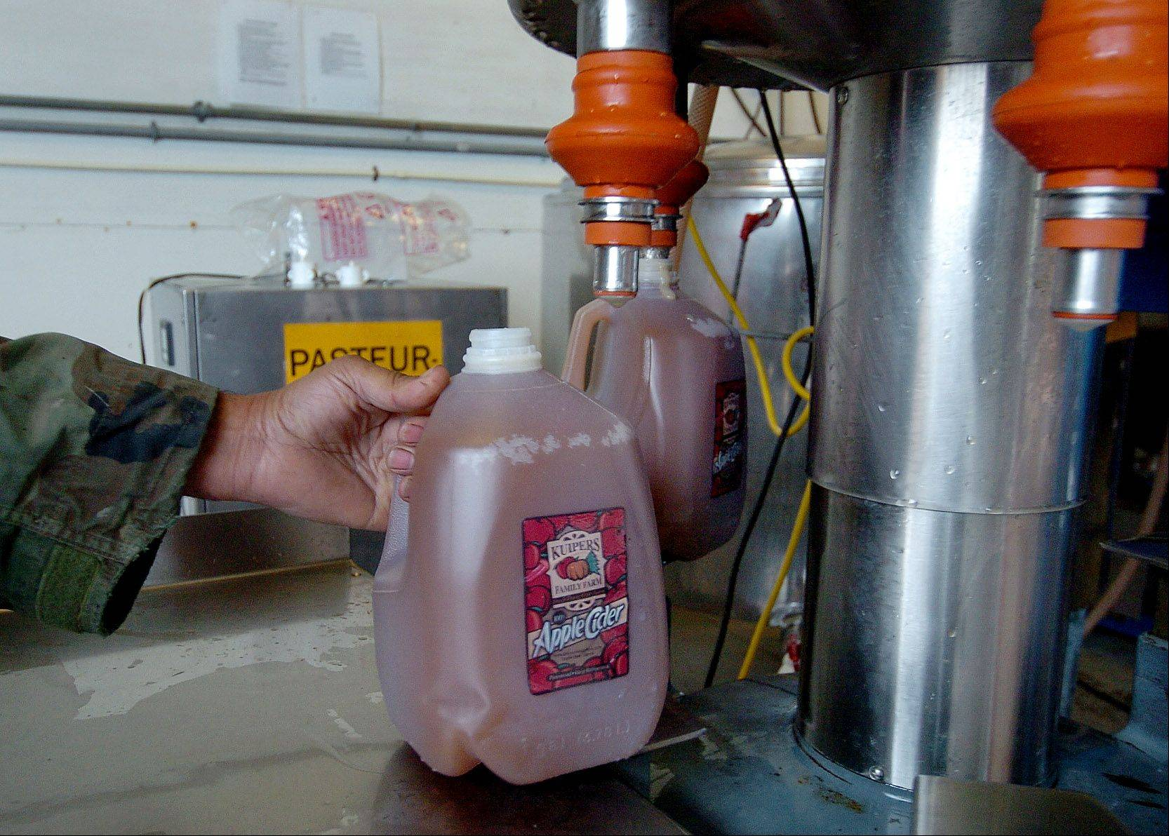 After undergoing a pasteurizing process, the cider is then bottled into gallon jugs.