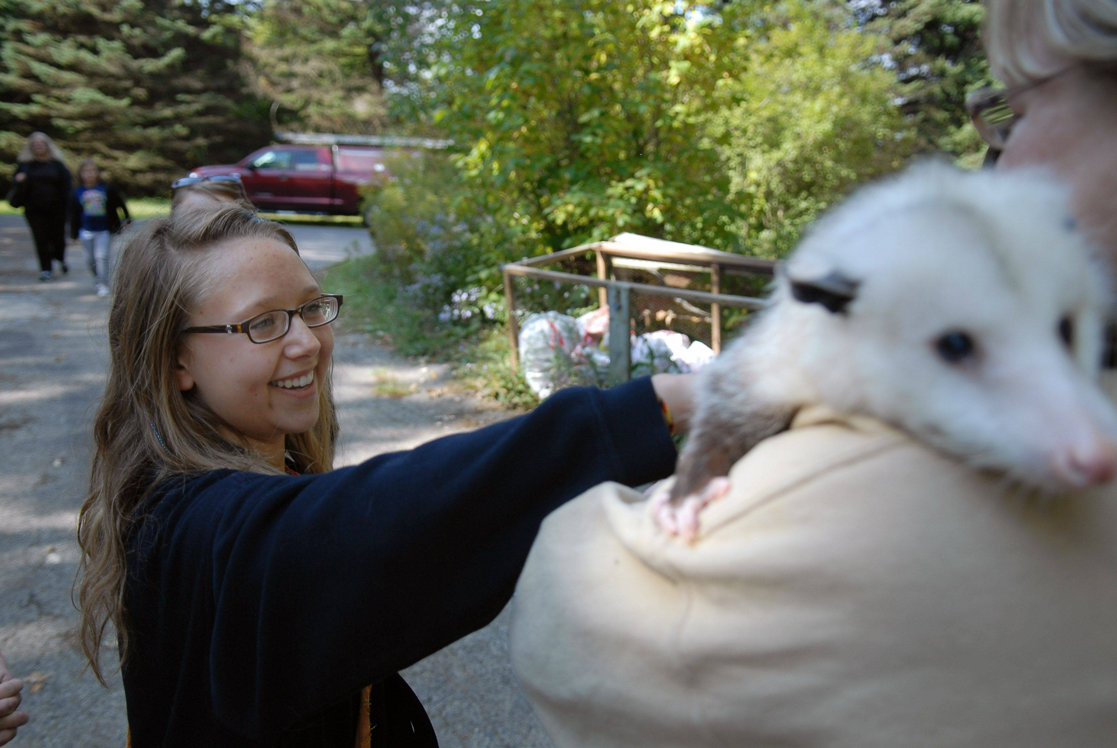 Laura Becker pets a possum Sunday during an open house at the Fox Valley Wildlife Center in Elburn. Becker is a volunteer at the center.