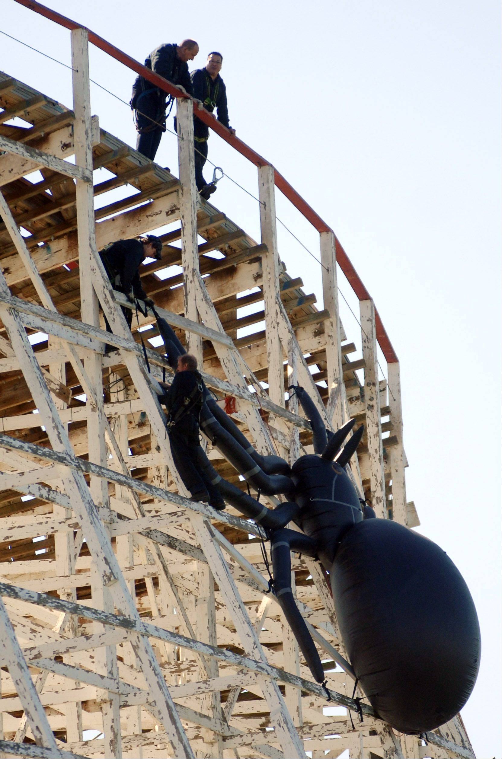 Crews hang one of the smaller spiders on the American Eagle at Six Flags Great America in Gurnee as they prepare for Fright Fest.