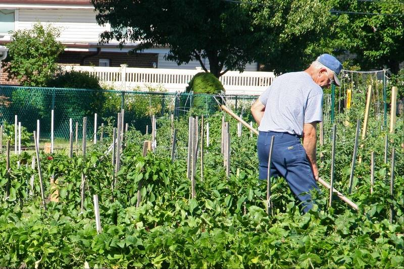 Des Plaines gardens plots yield bountiful harvest