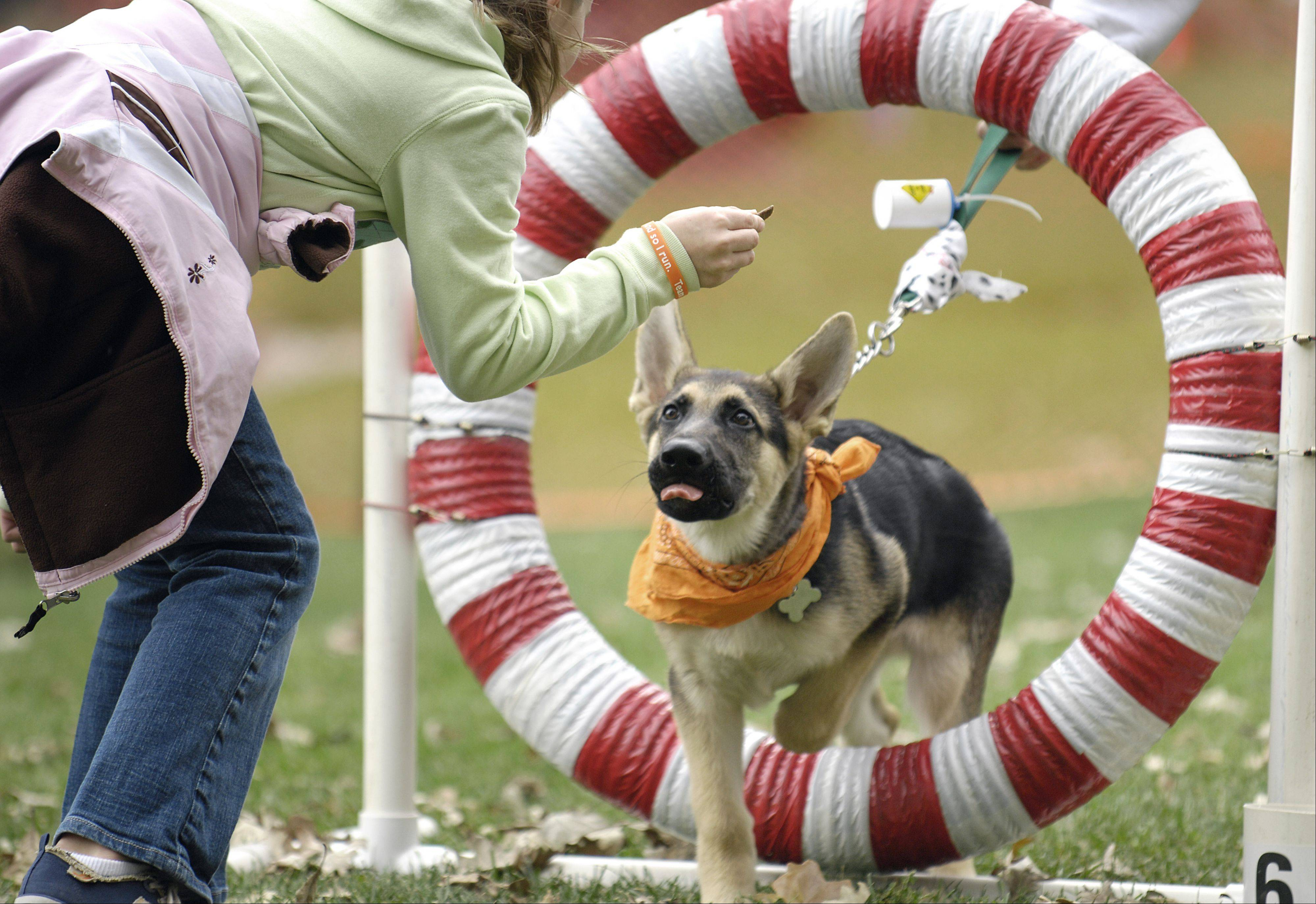 Dogs and their owners can watch agility demonstrations and try the tricks themselves at Dog-tober Fest, set for noon to 4 p.m. Saturday, Oct. 1, in Deicke Park, Huntley.