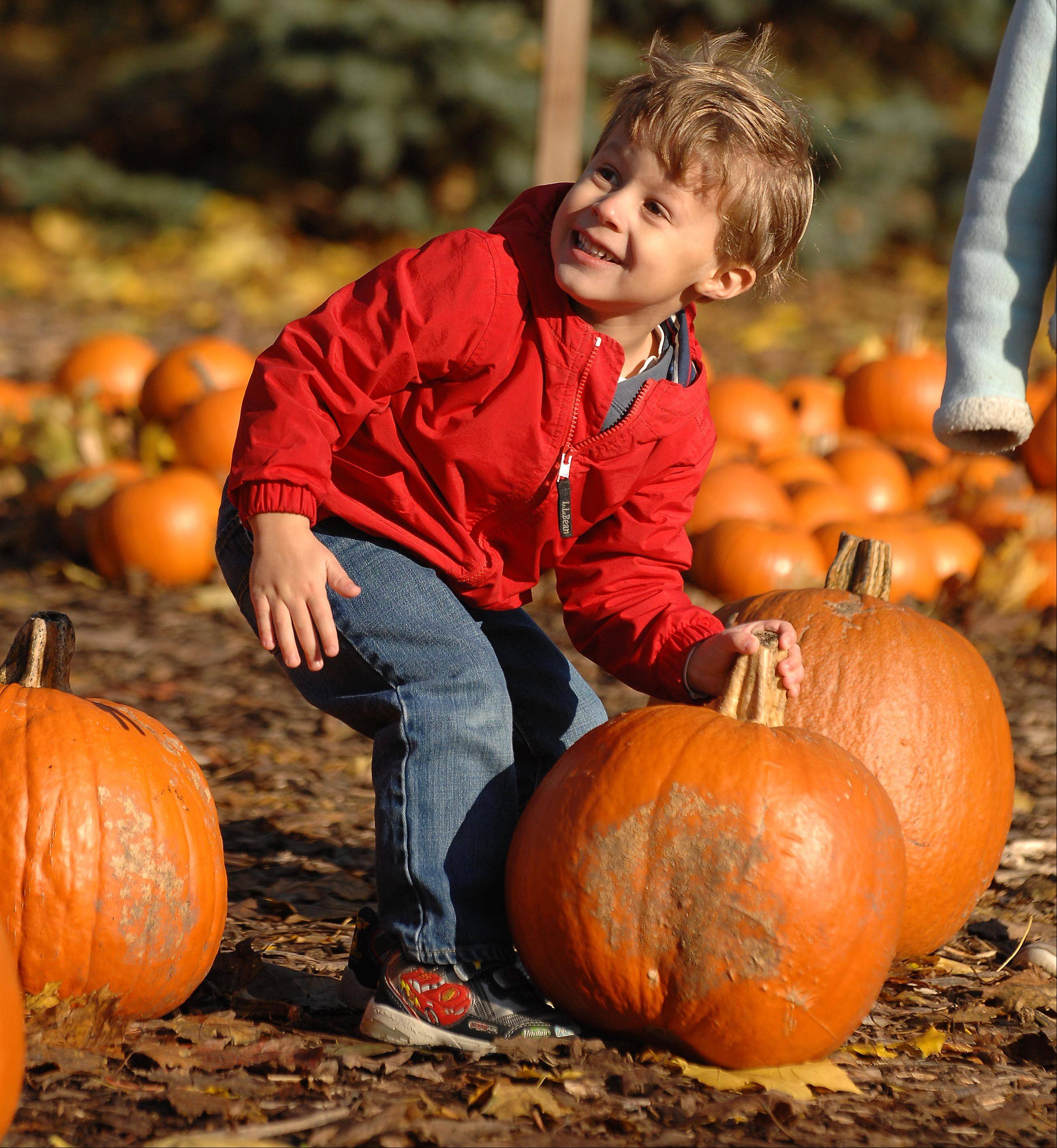 Kids have thousands of pumpkins to choose from at Cosley Zoo's Pumpkin Fest.