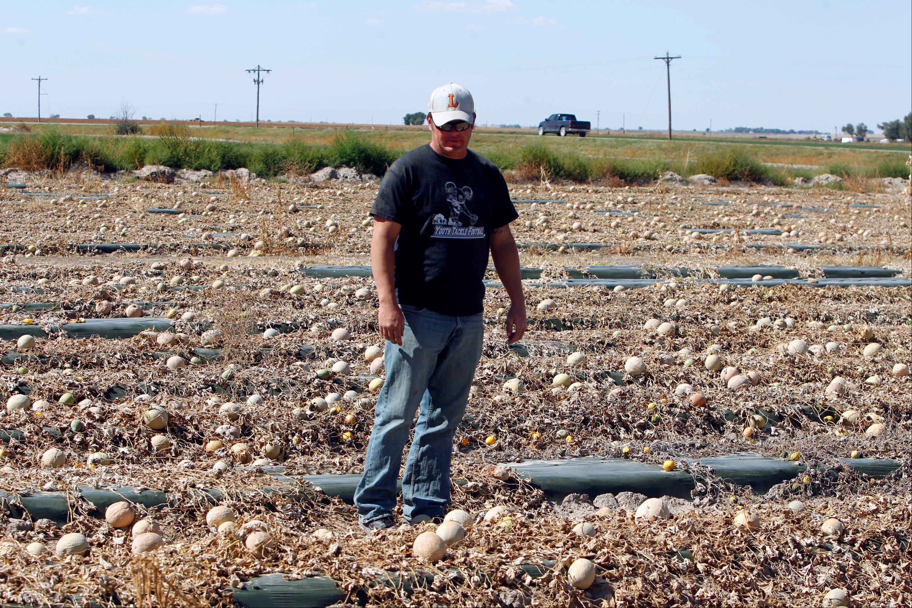 Eric Jensen walks a field with rotting cantaloupes on the Jensen Farms near Holly, Colo. Eric and his brother Ryan own Jensen Farms that has been identified as the source of the national listeria outbreak that has killed more than a dozen people so far.
