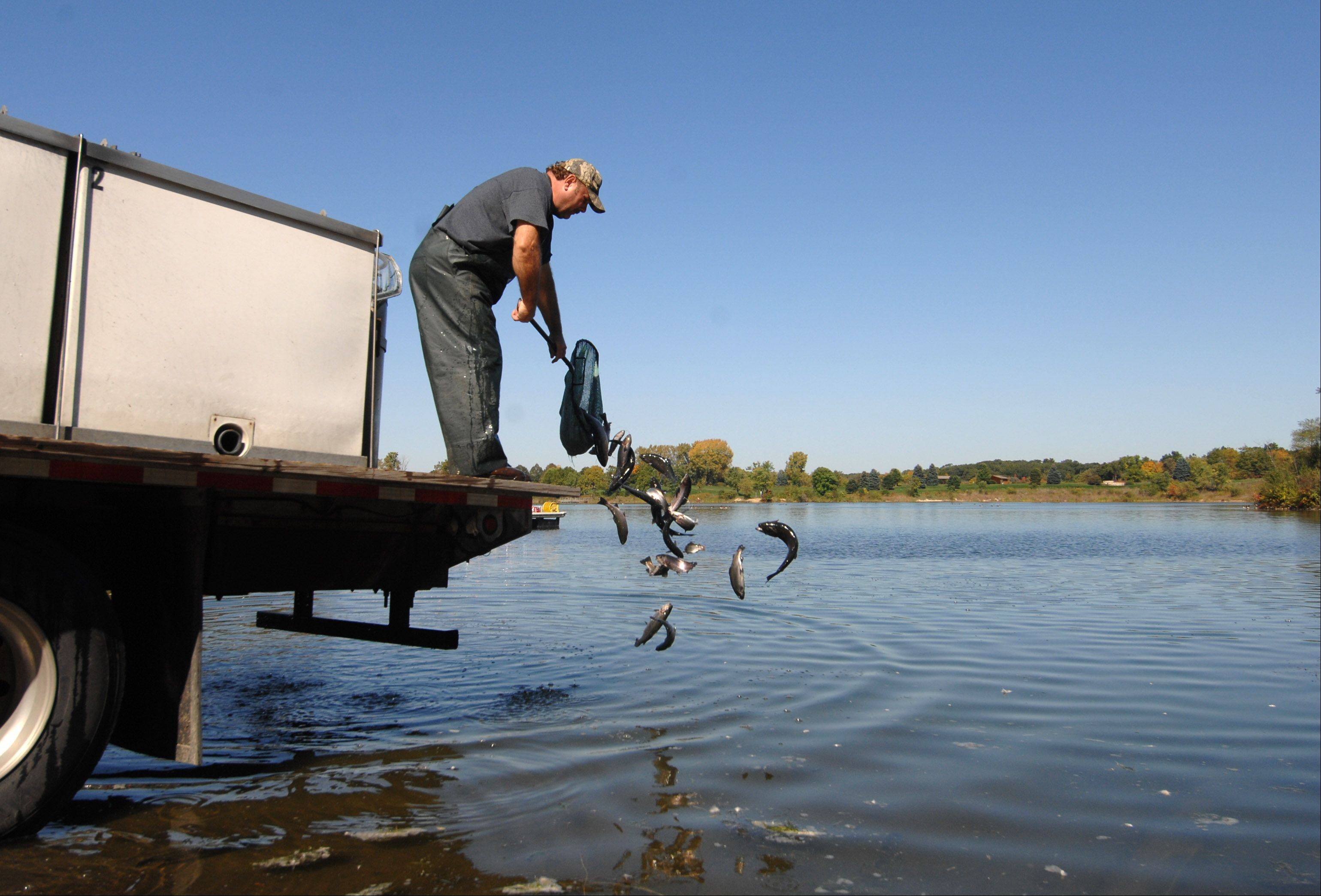 Kevin Pietschman of Keystone Hatcheries adds some of roughly 2,400 rainbow trout to Silver Lake at Blackwell Forest Preserve near Warrenville. Trout season opens at 6 a.m. Oct. 15.