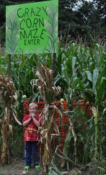 Corn mazes appeal to people of all ages.
